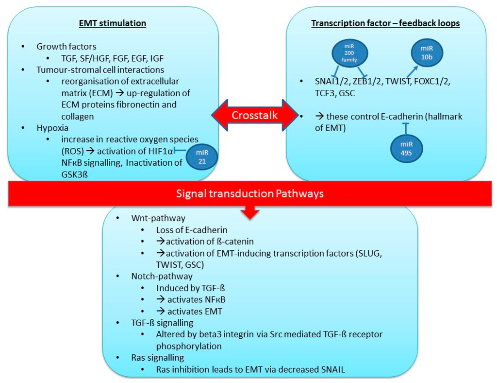 Ijms Free Full Text Mirnas And Other Epigenetic Changes As