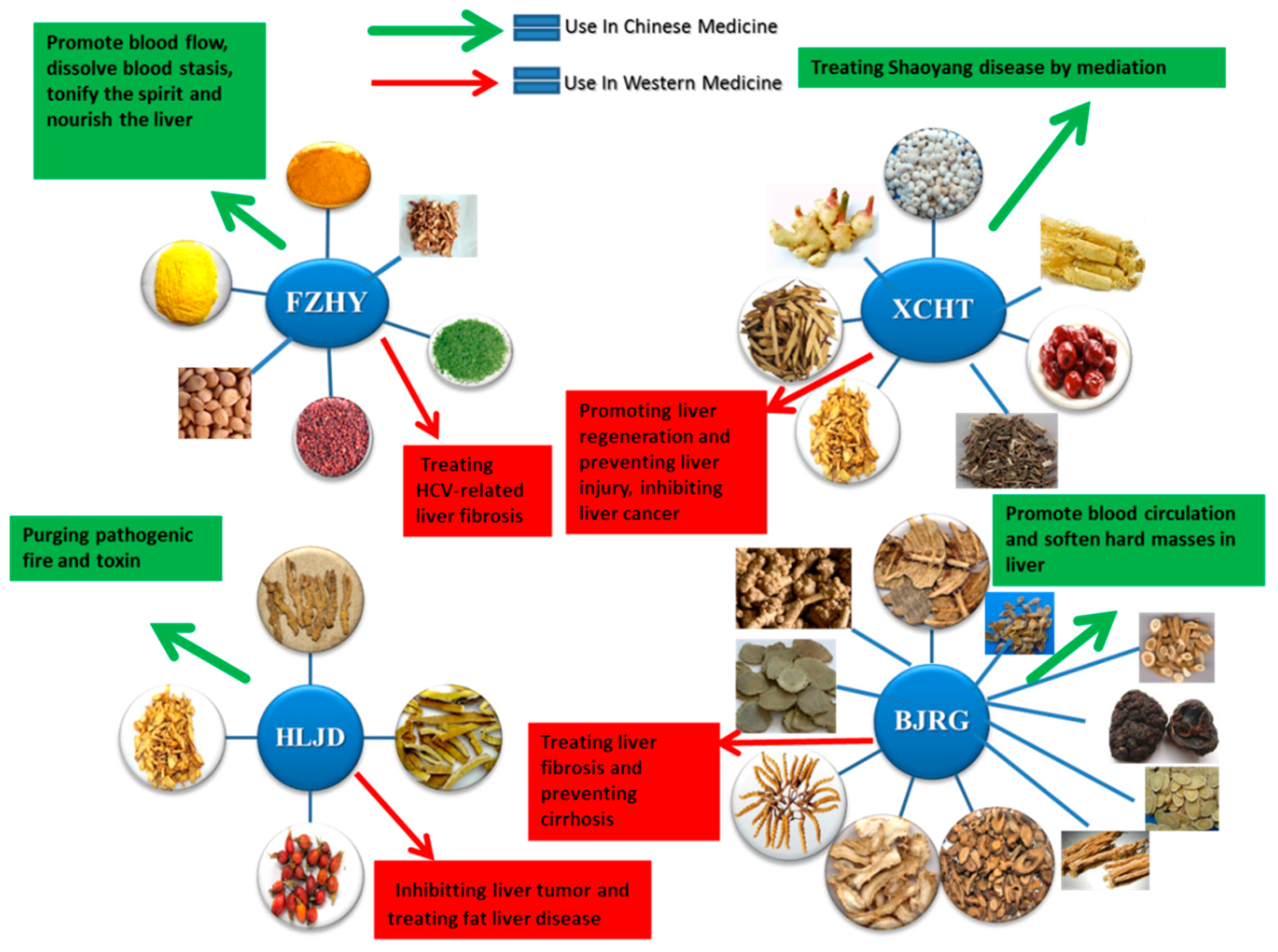 Cancer herbal liver treatment - Ijms Free Full Text Current Status Of Herbal Medicines In Chronic Liver Disease Therapy The Biological Effects Molecular Targets And Future Prospects