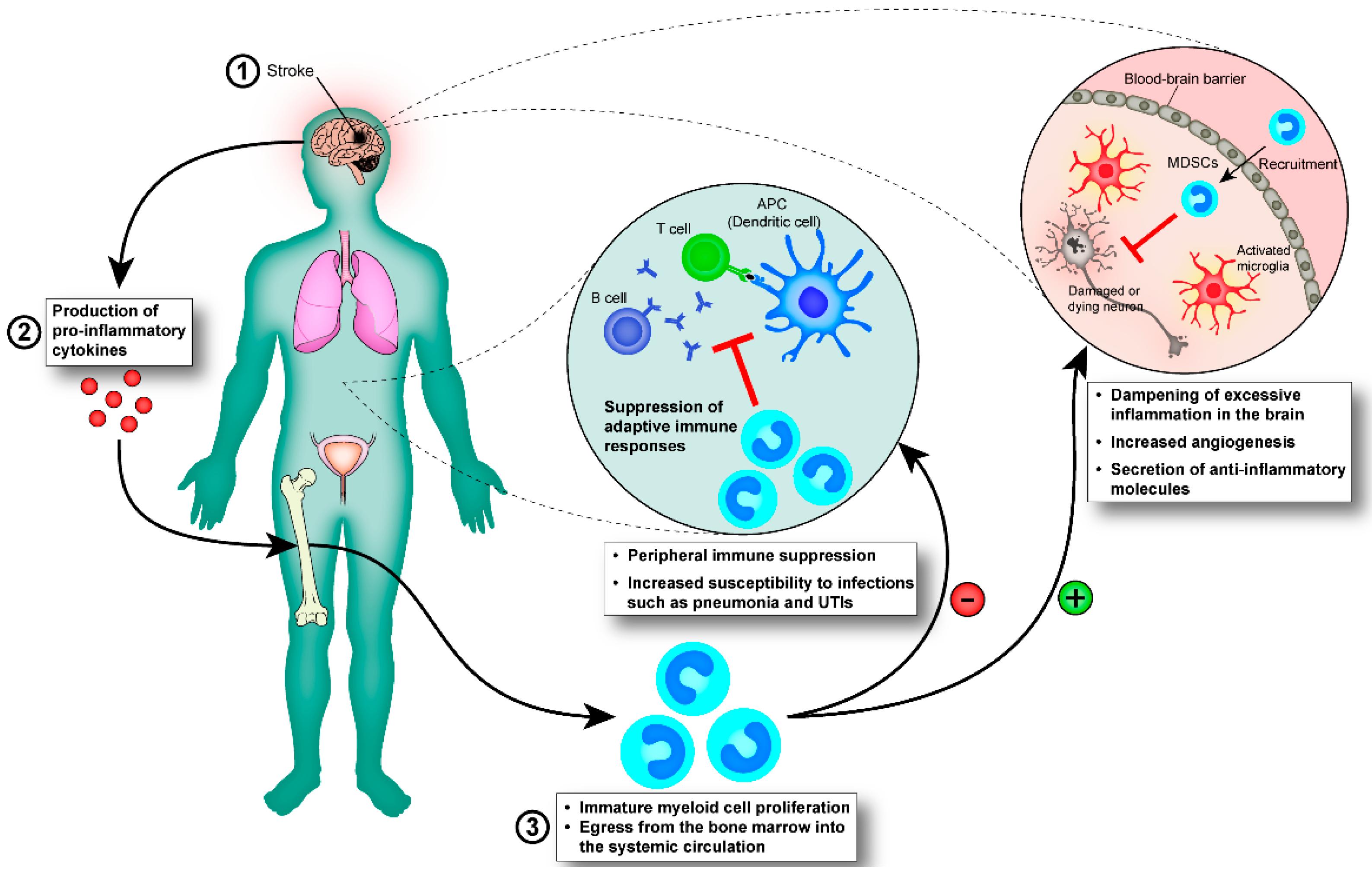 Immunity 65