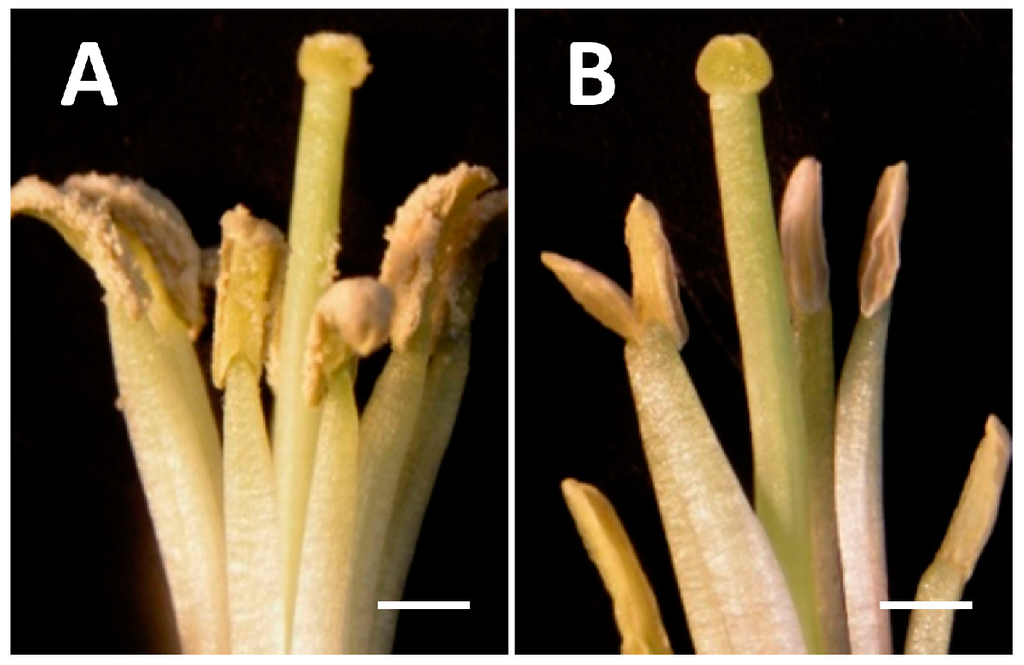 IJMS | Special Issue : Plant Molecular Biology Flower Designs For Raised Garden B E A Html on