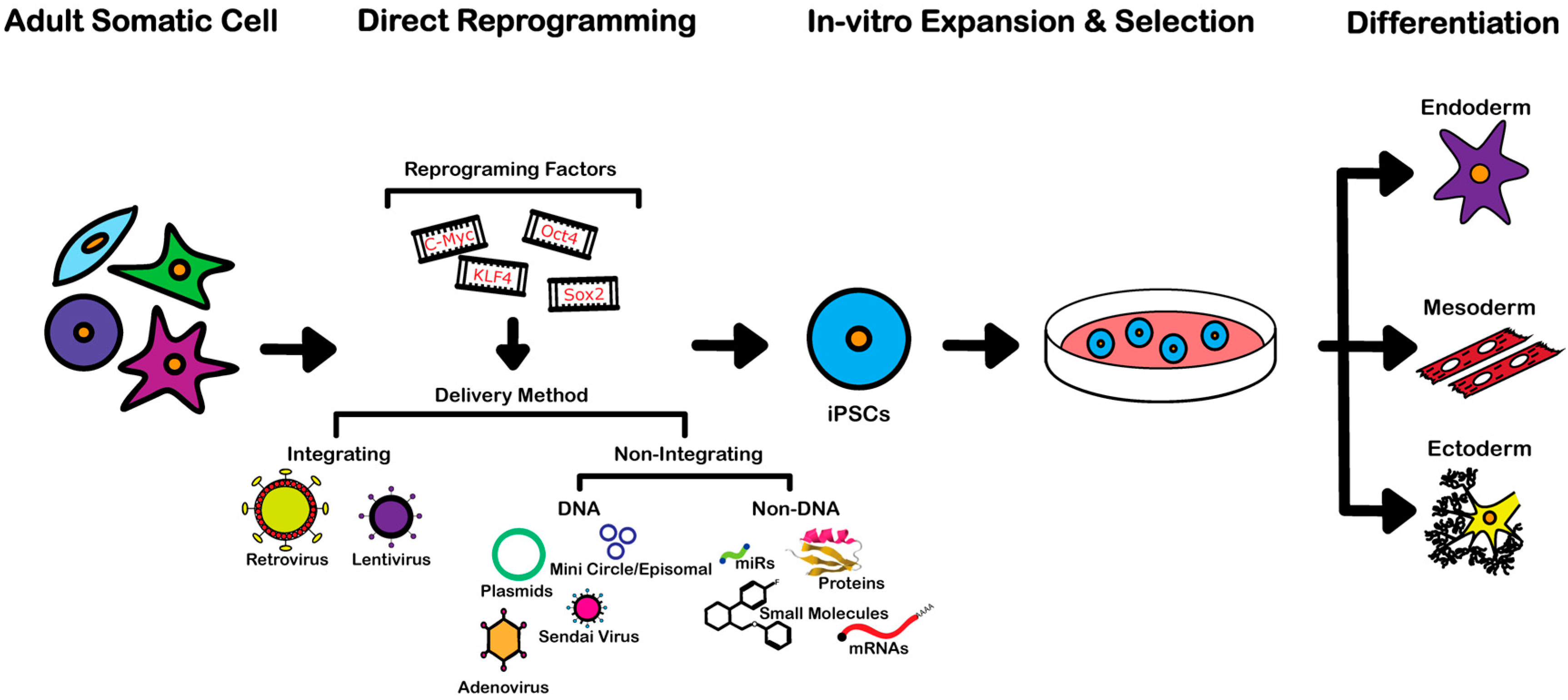 3cfb22e3aa3eef IJMS   Free Full-Text   An Overview of Direct Somatic Reprogramming ...