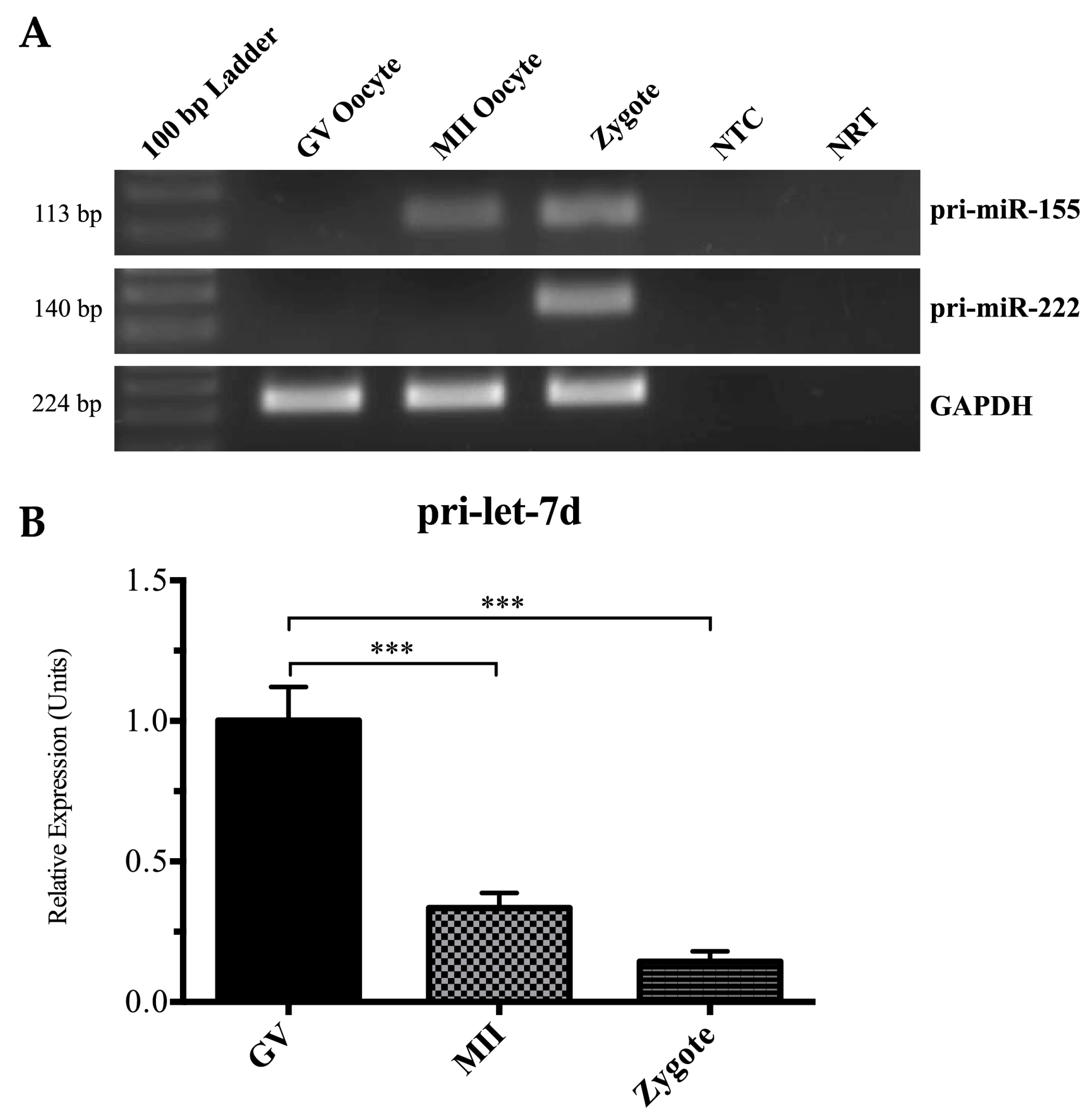 IJMS   Free Full-Text   MicroRNA Expression during Bovine