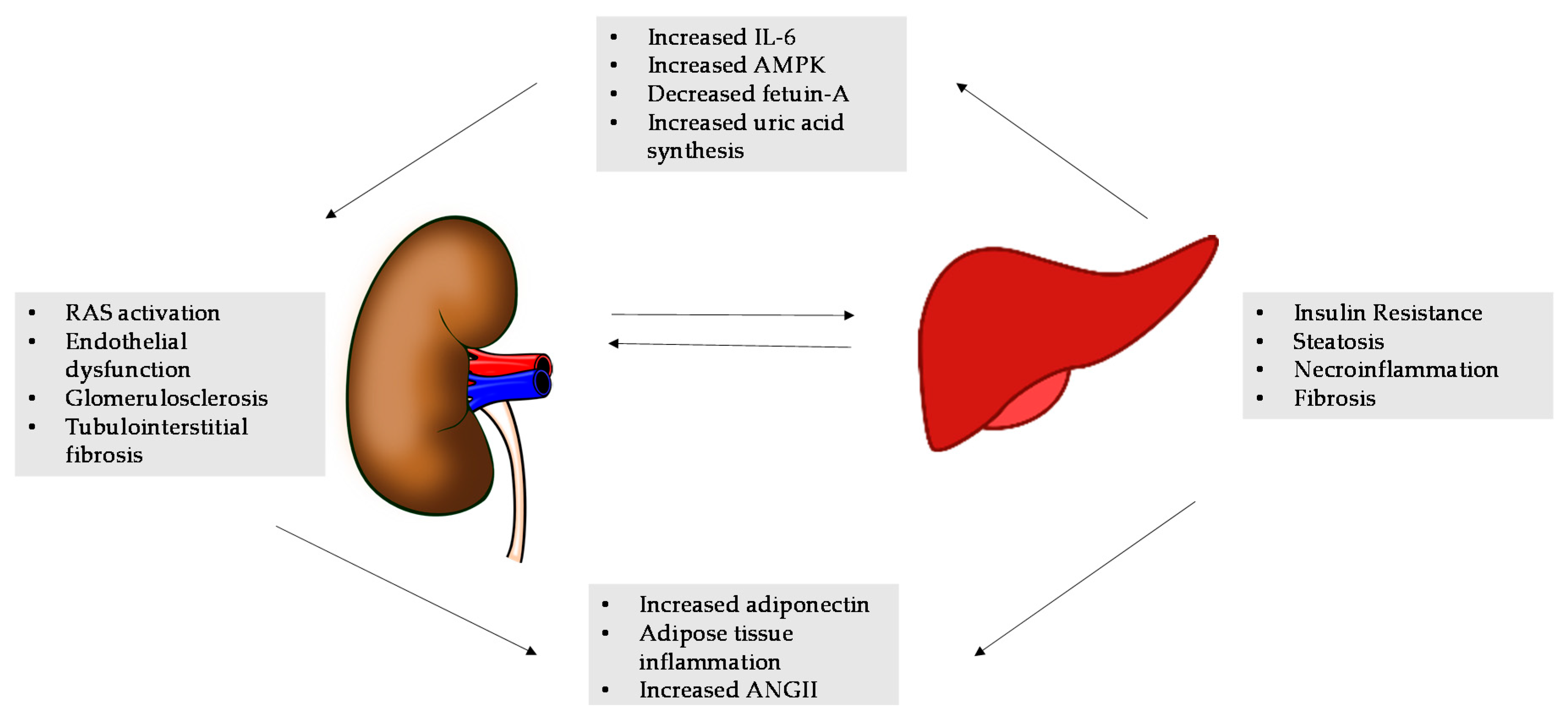 Ijms Free Full Text Nafld And Chronic Kidney Disease