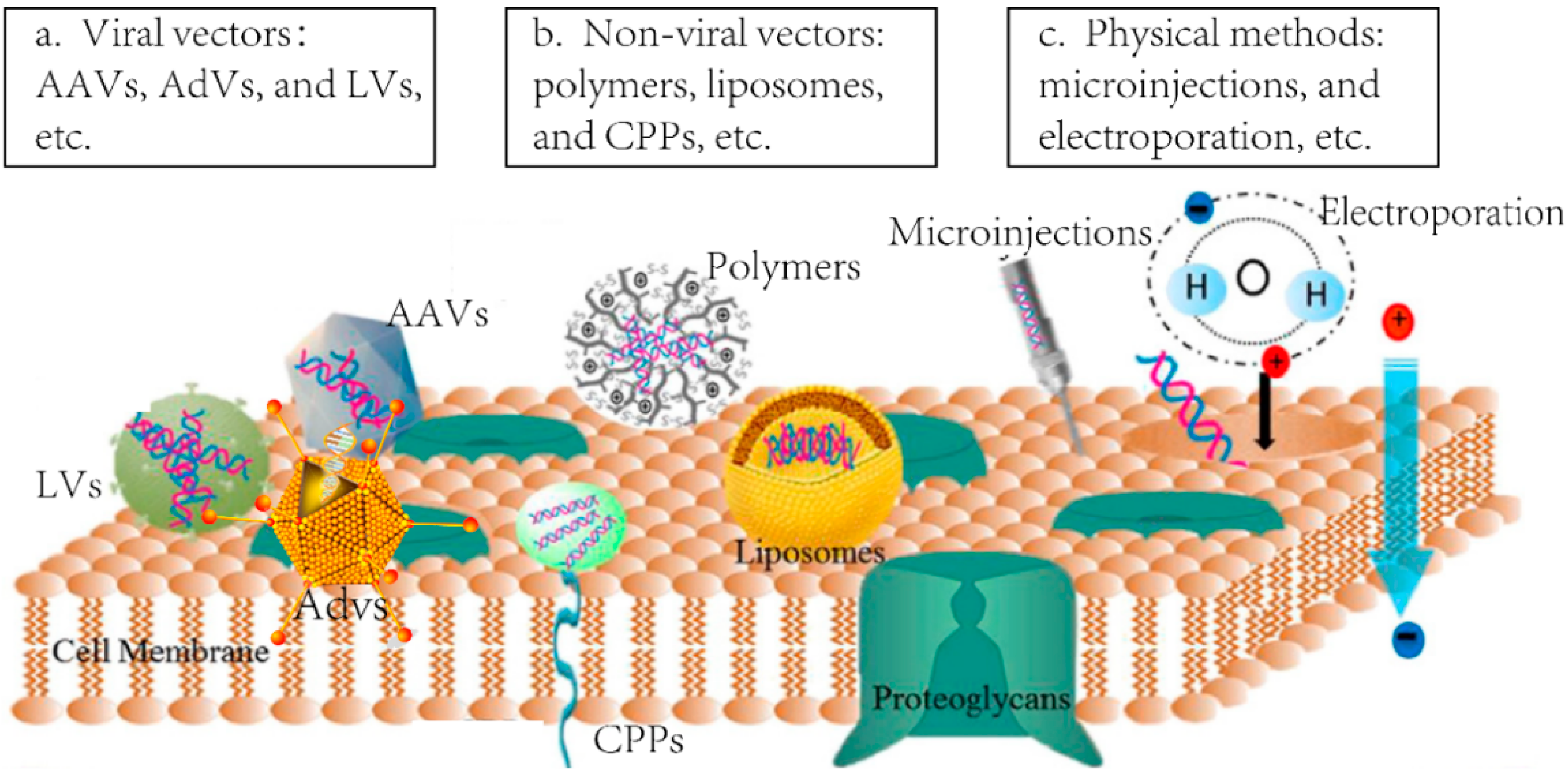 Outstanding adenovirus vector pics