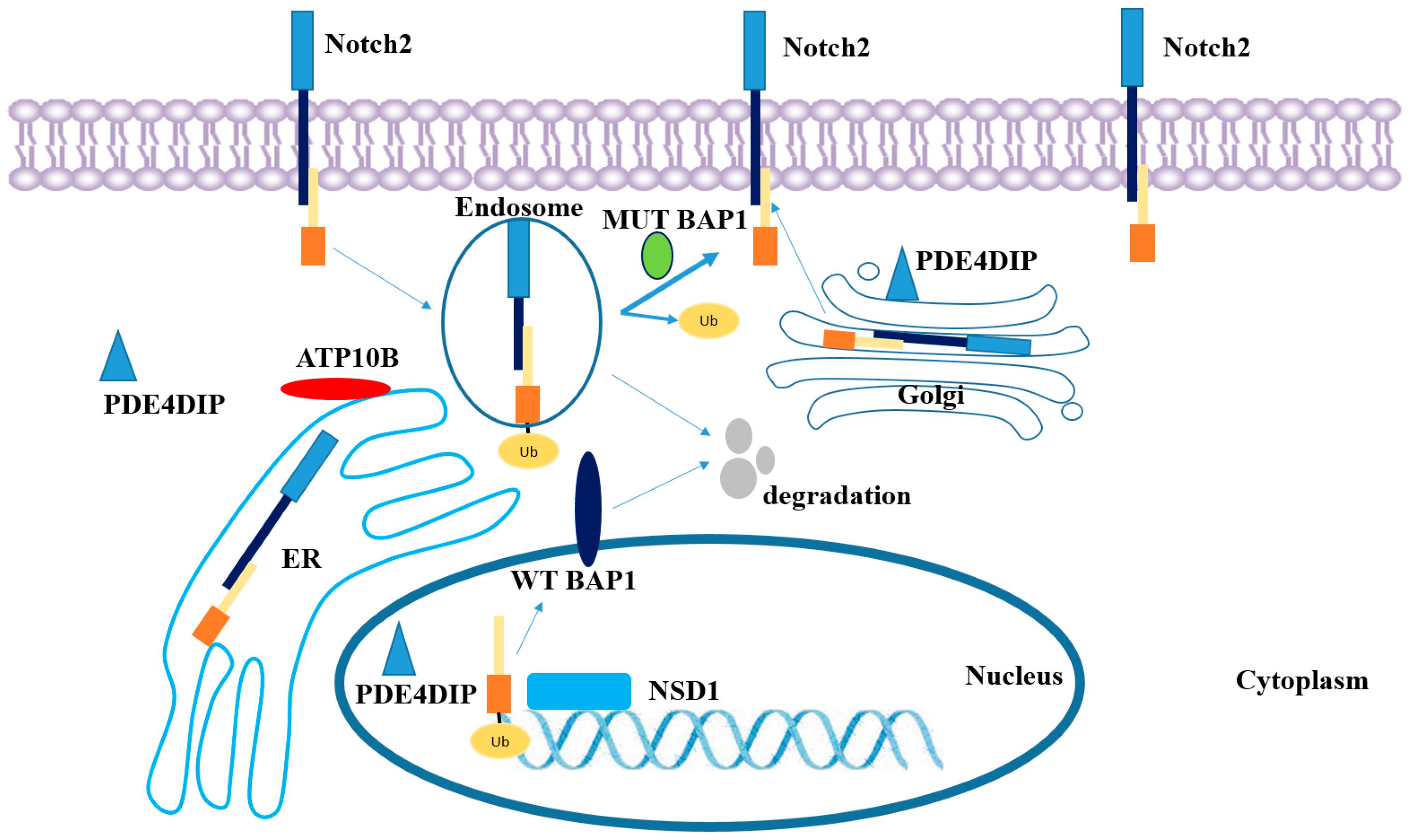 Ijms Free Full Text A Tumor Specific Neo Antigen