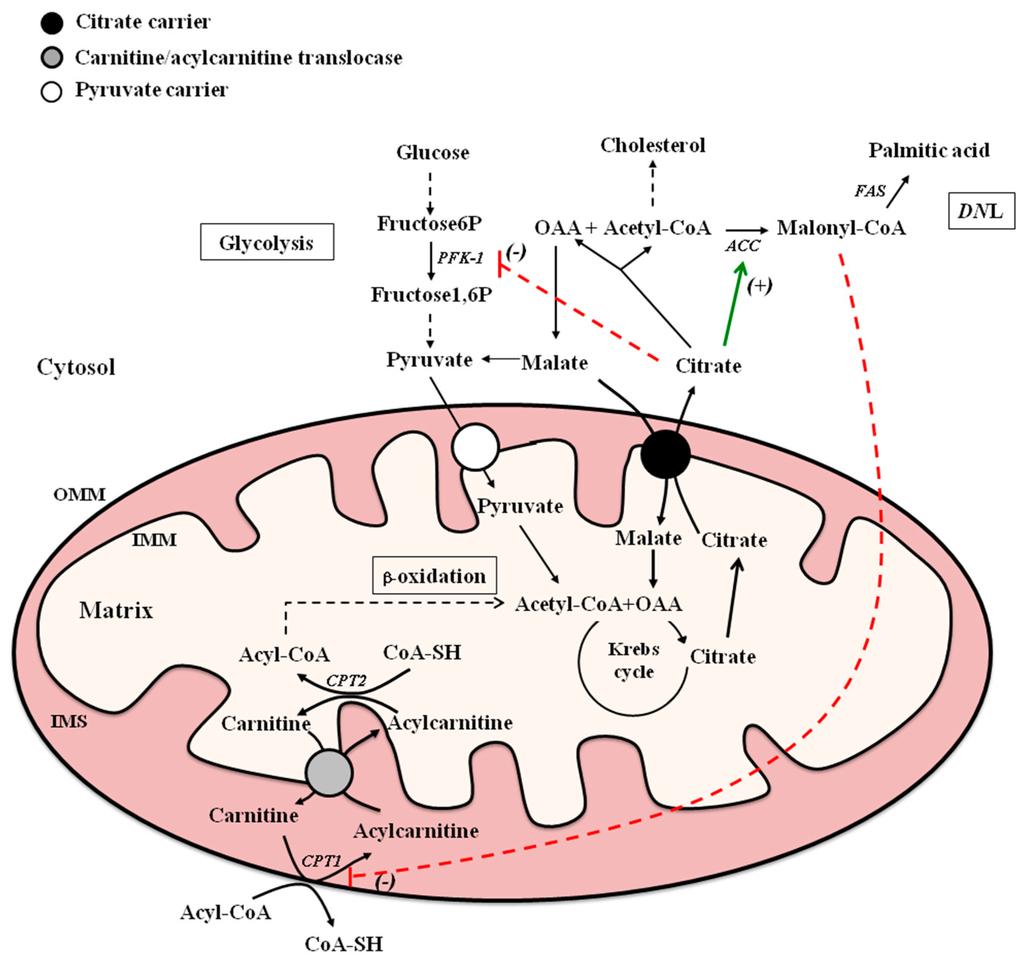 El estrés y el poder del metabolismo epub