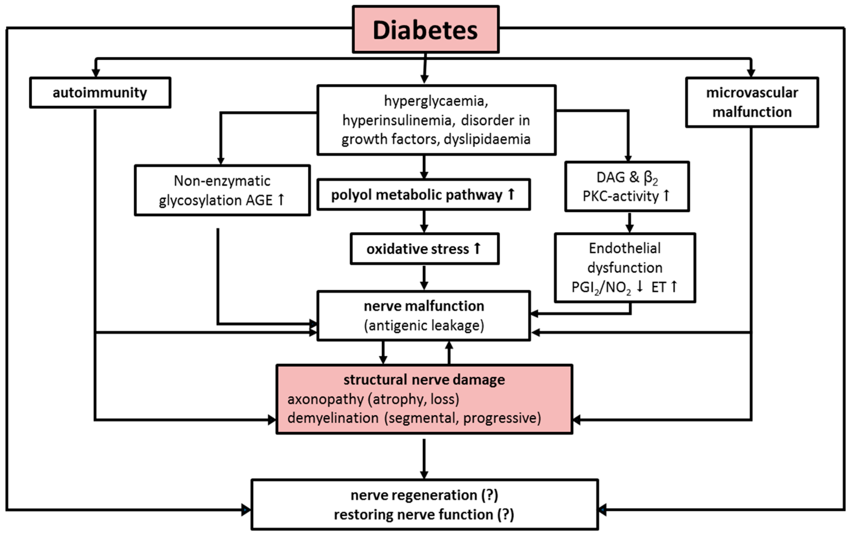 Ijms Free Full Text Neuropathy And Diabetic Foot Syndrome Html