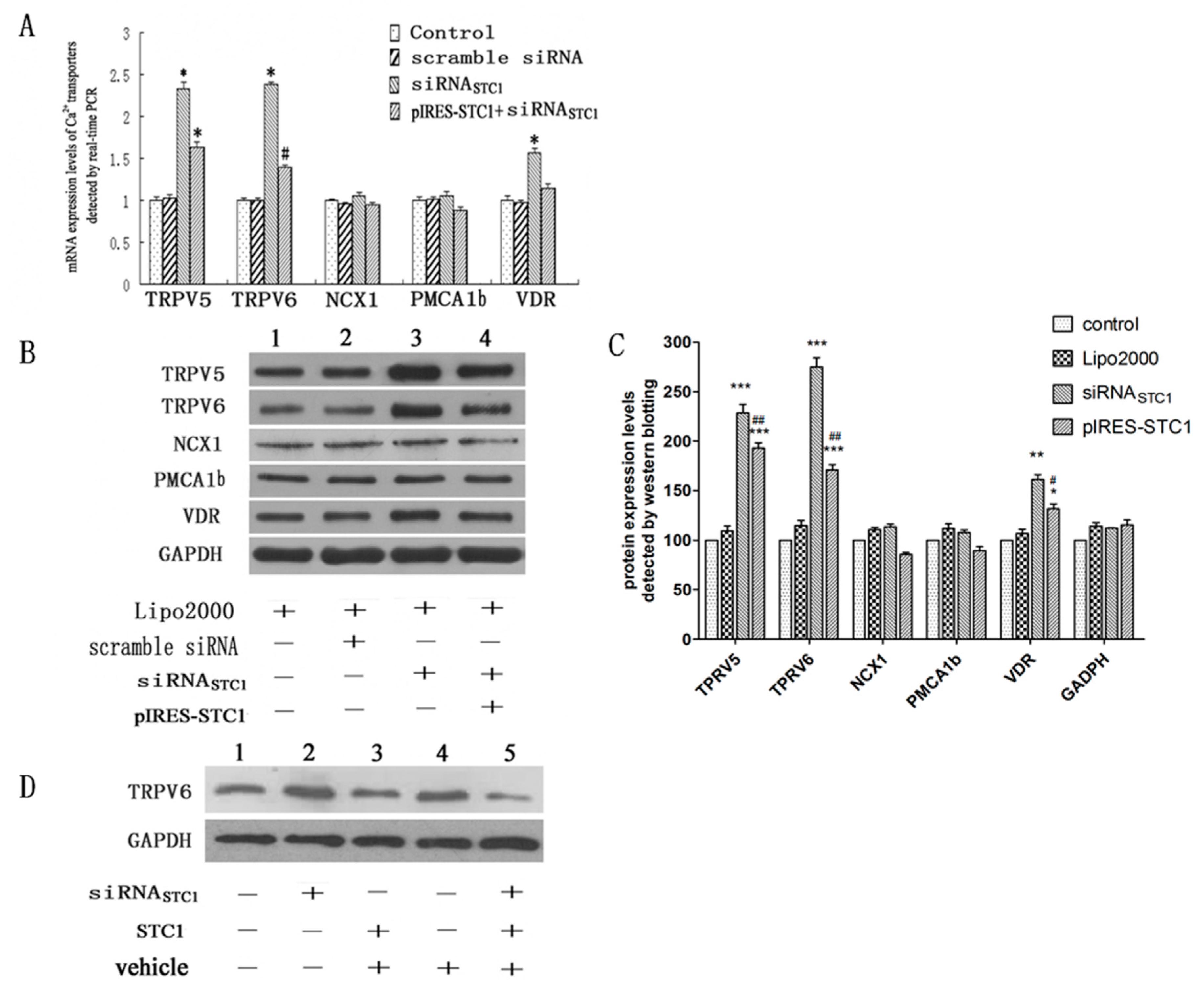 An analysis of intestinal calcium transport across the rat intestine.