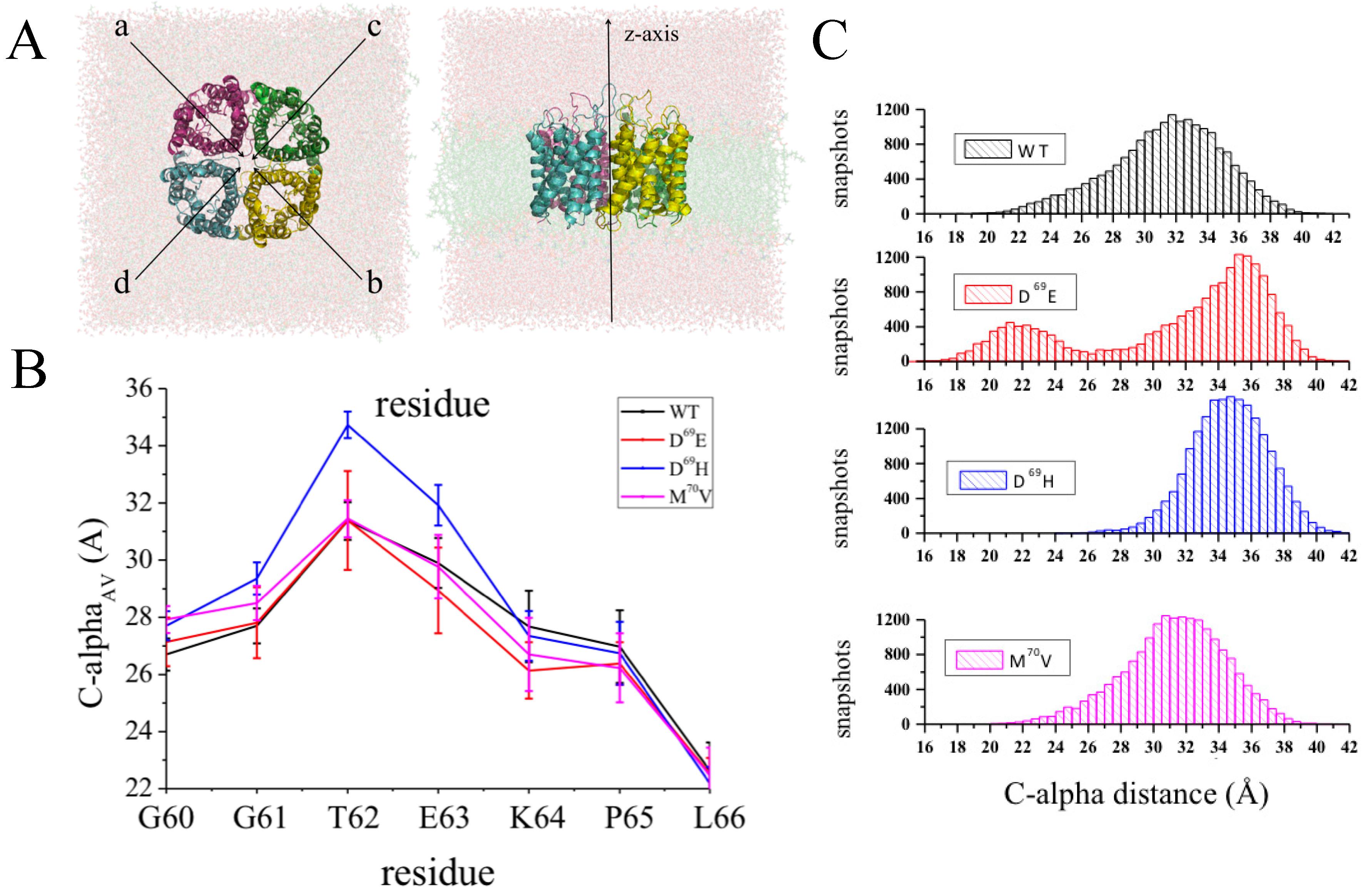 IJMS   Free Full-Text   Human Aquaporin-4 and Molecular