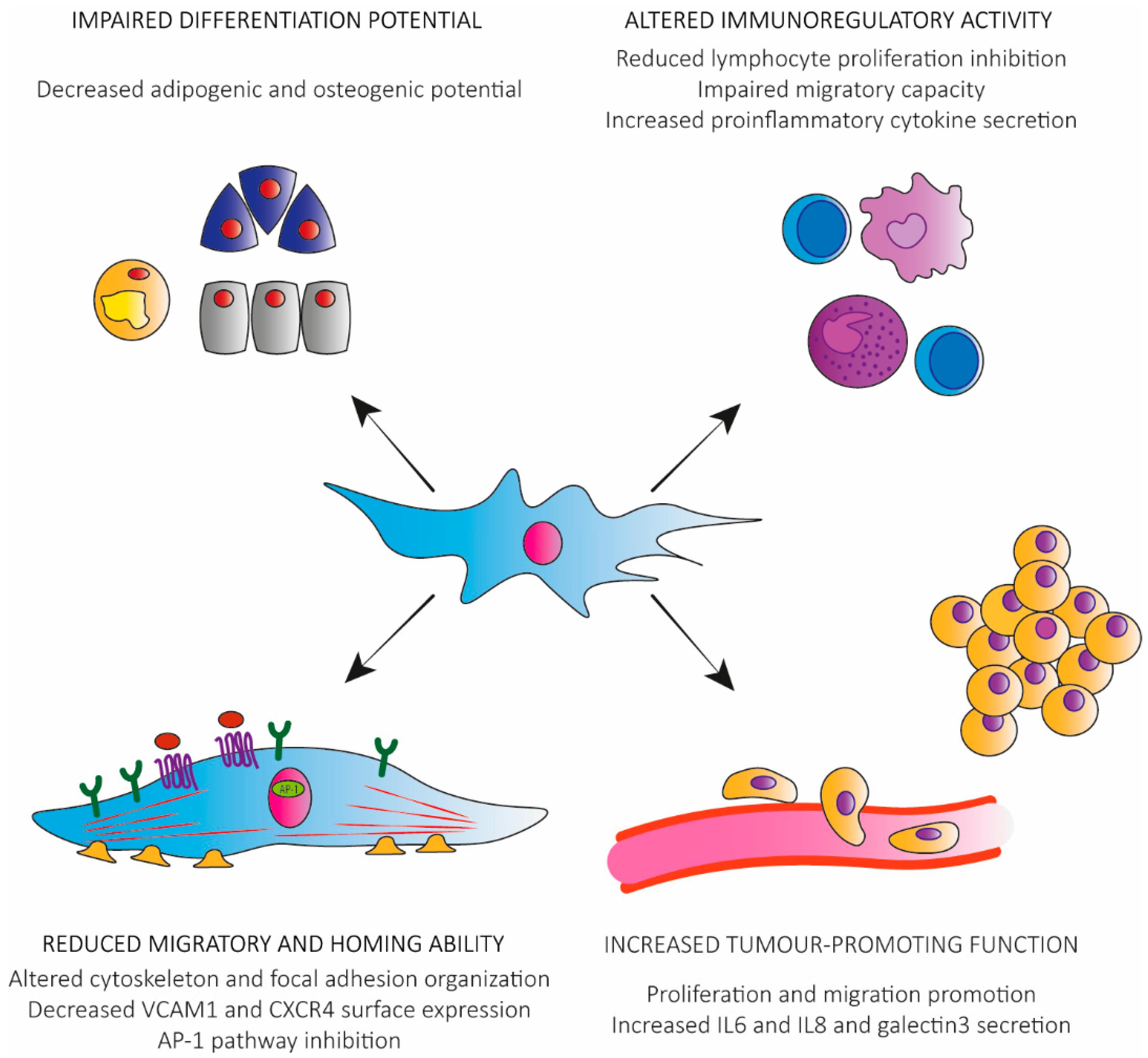 stem cells for dummies pdf