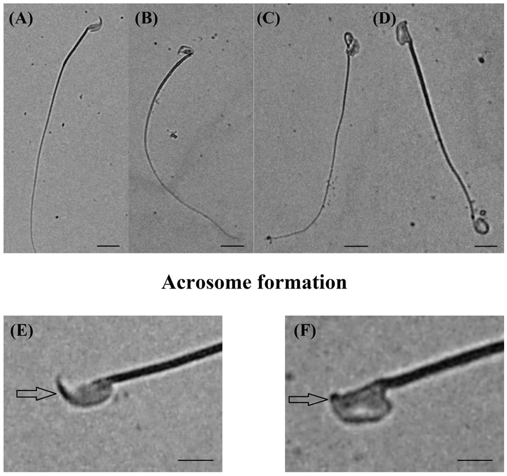 effects of lead acetate in the Issn 2320-1355 vol 2(5), 2013, pp 121-125   effect of  acute lead acetate exposure on liver of mice.