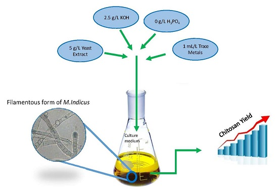Isolation of Invertase Enzyme from Baker's Yeast