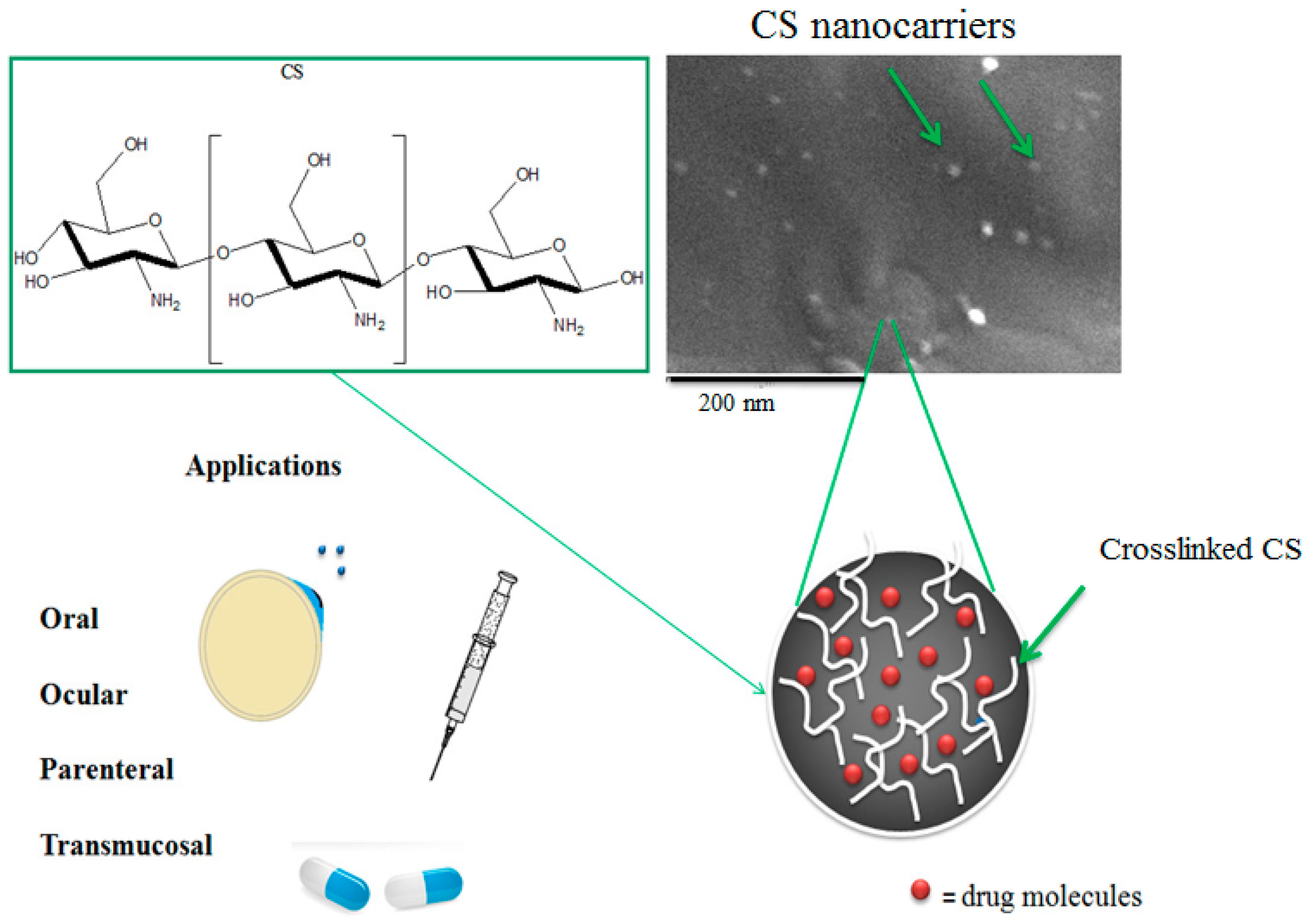 Targeting Strategies for Multifunctional Nanoparticles in Cancer Imaging and Therapy