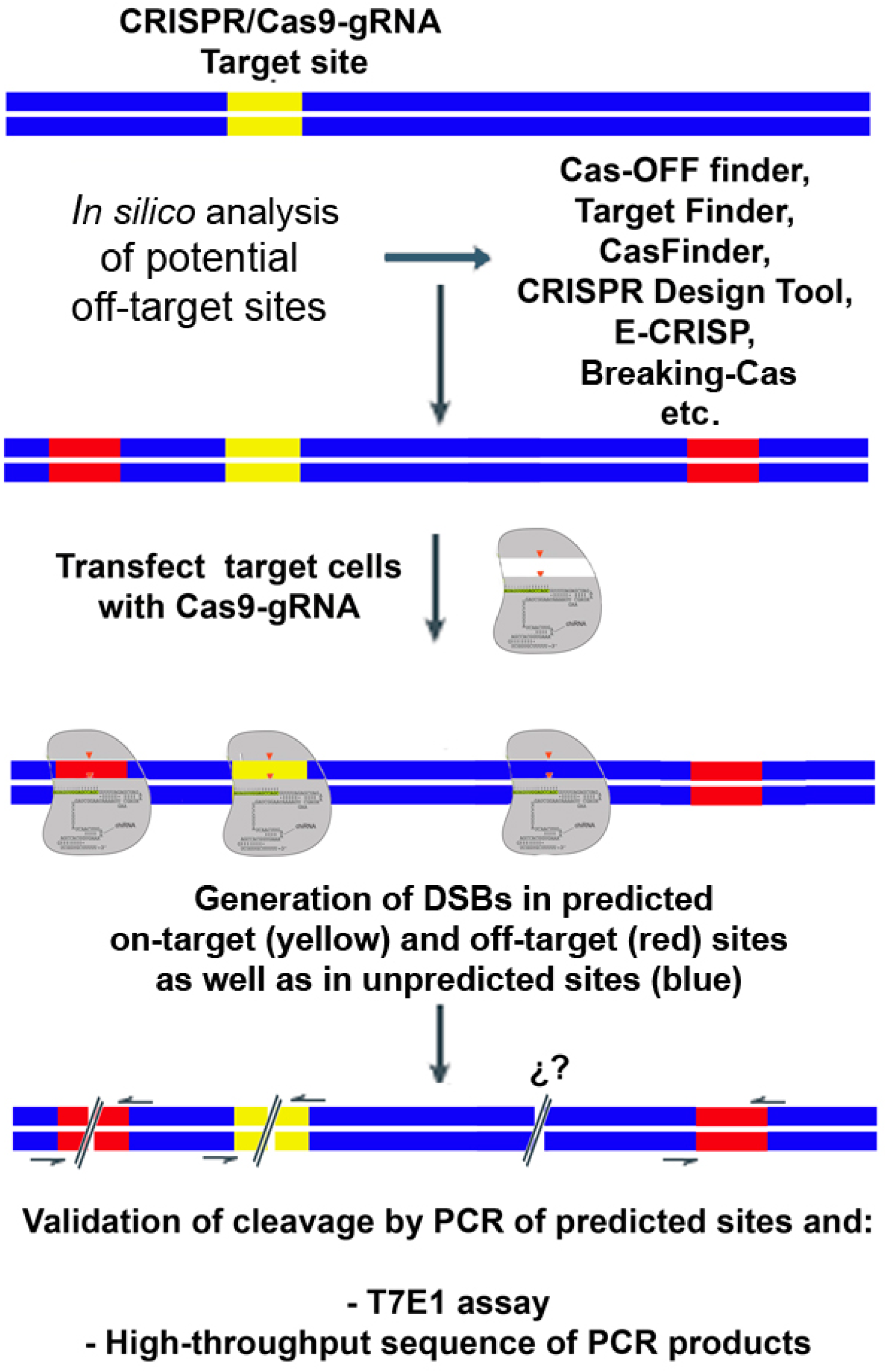 IJMS | Free Full-Text | Biased and Unbiased Methods for the Detection of Off-Target Cleavage by ...