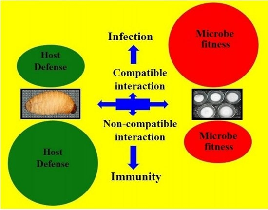IJMS | Free Full-Text | Susceptibility and Immune Defence