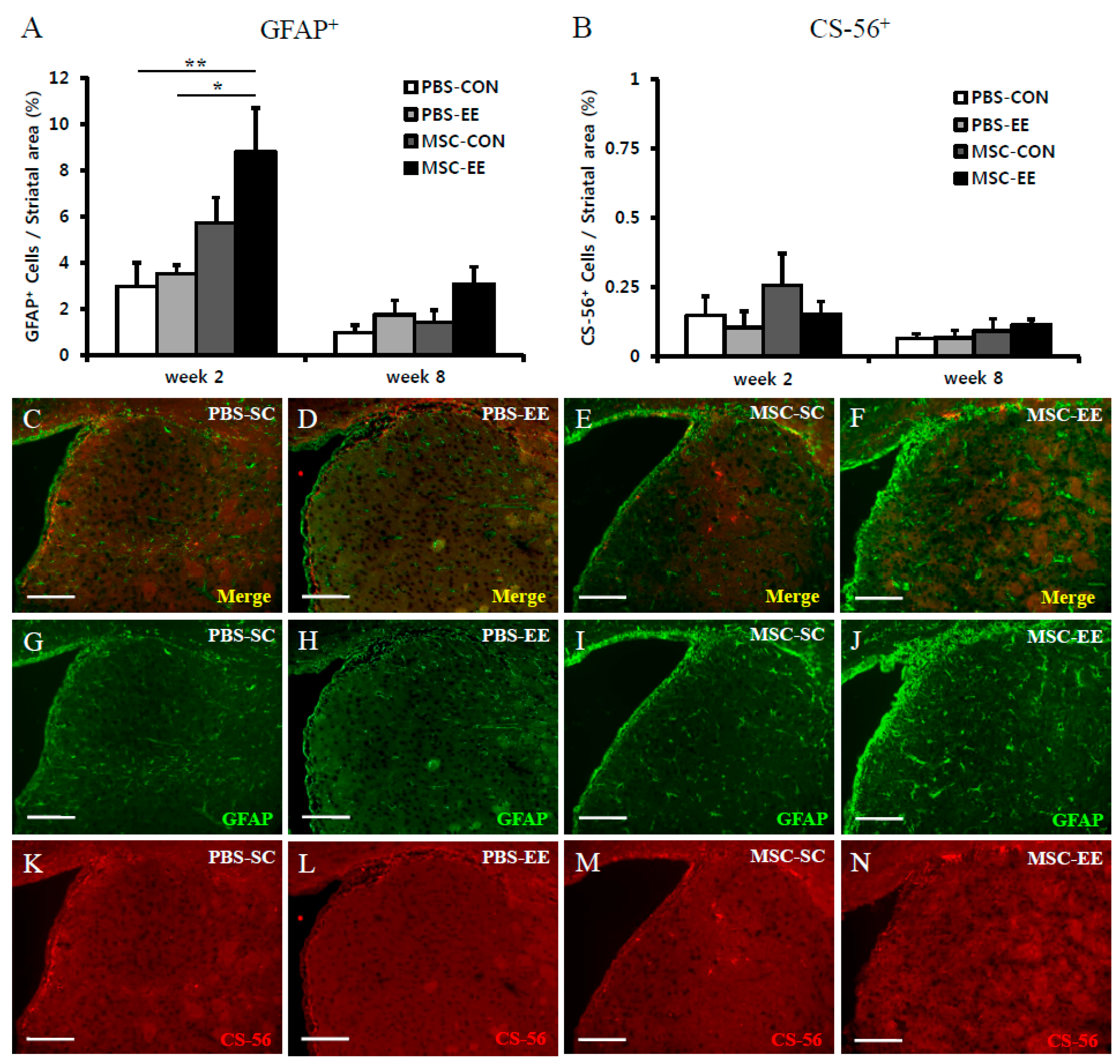 Ijms Free Full Text Astroglial Activation By An