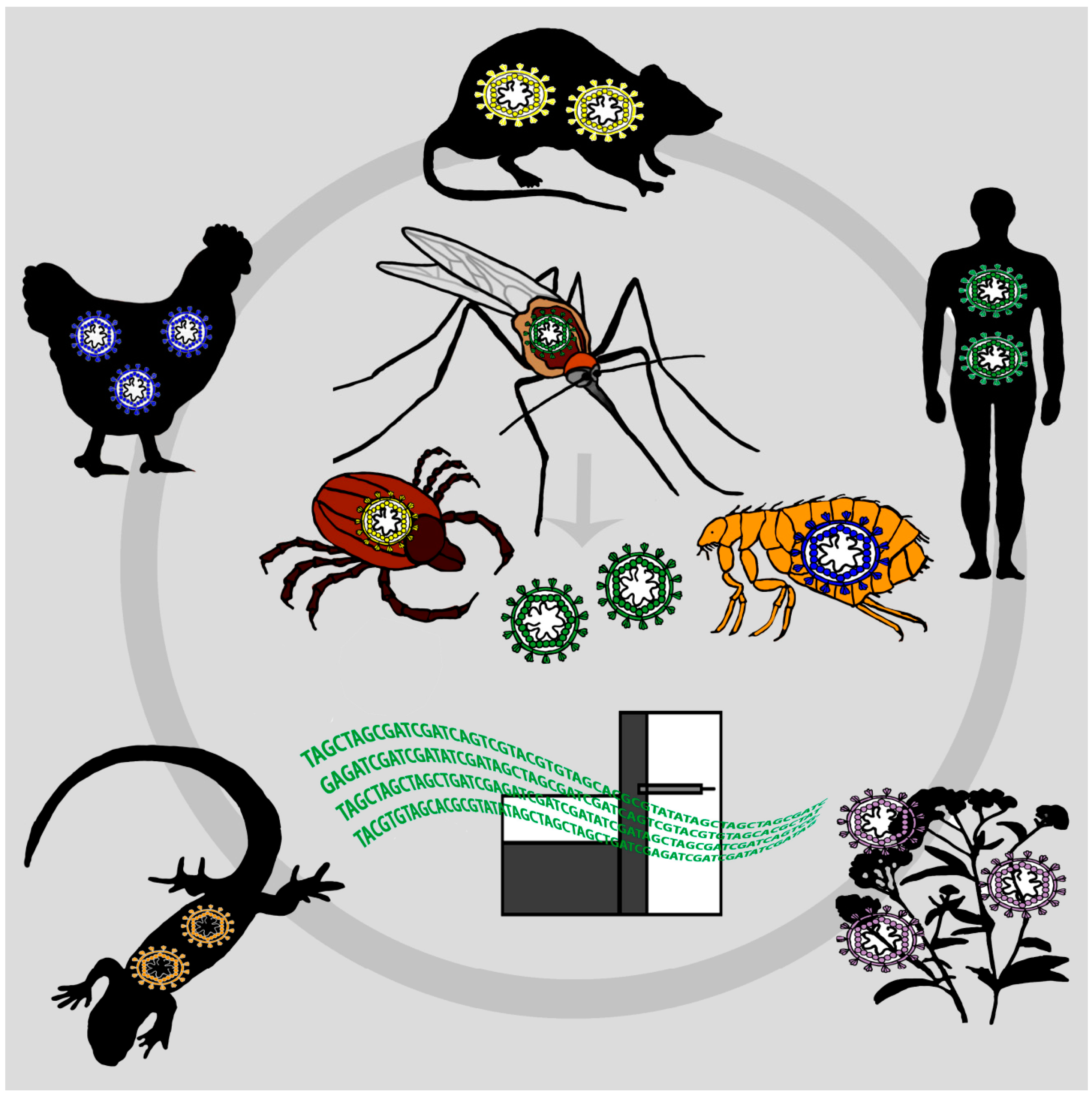 Viral Metagenomics On Blood