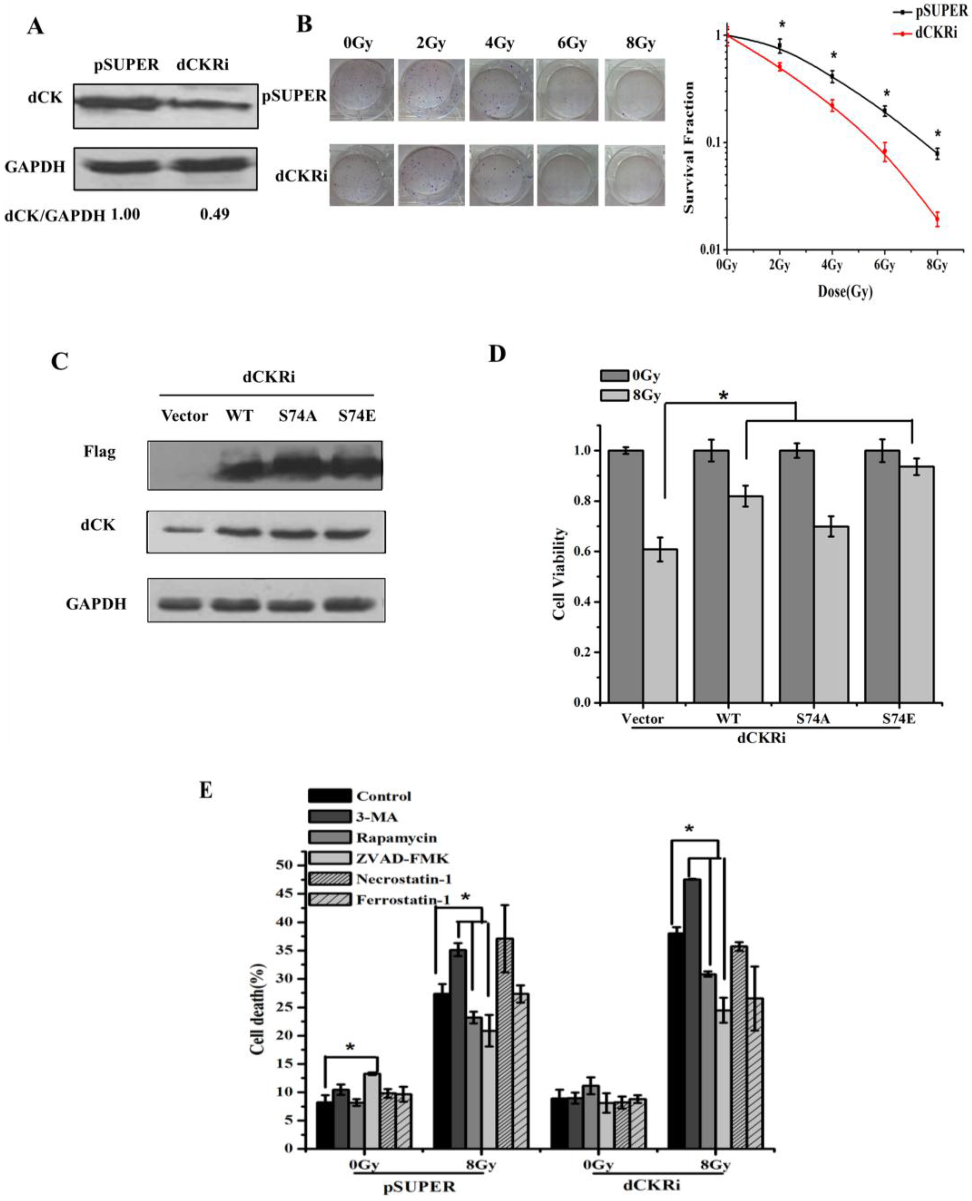 Ijms free full text the role of deoxycytidine kinase dck in no ccuart Image collections