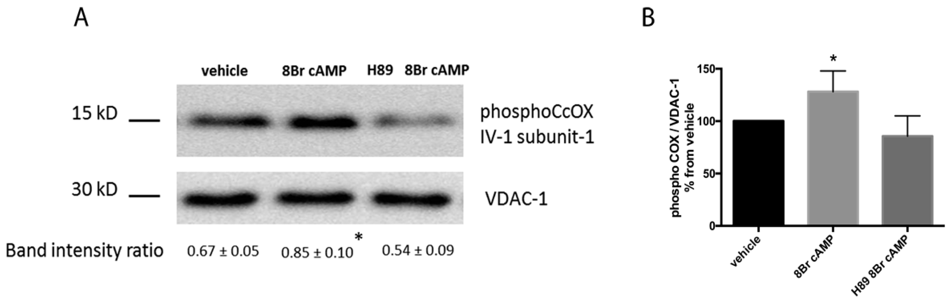 IJMS | Free Full-Text | Abnormal Mitochondrial cAMP/PKA Signaling Is ...
