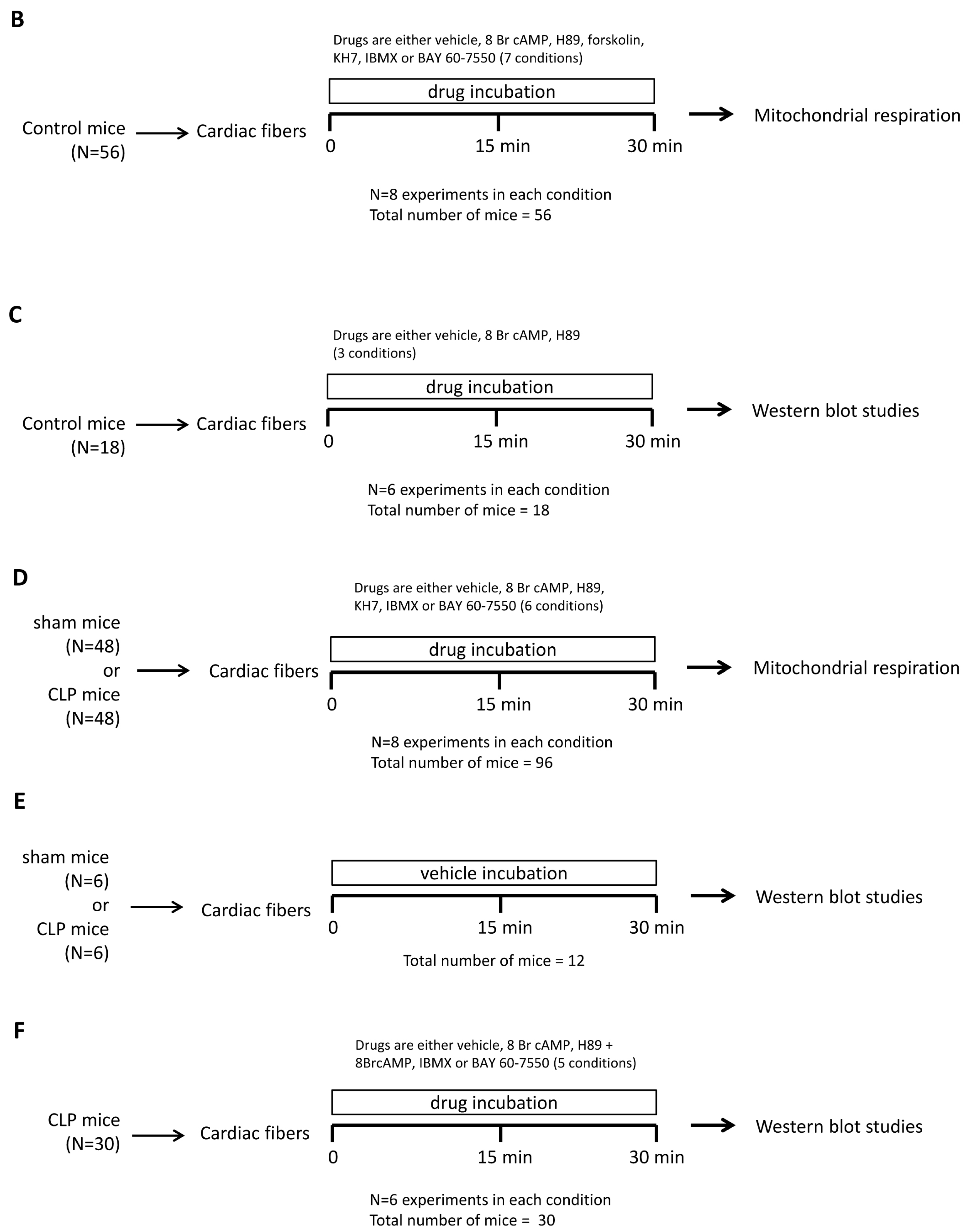 IJMS | Free Full-Text | Abnormal Mitochondrial cAMP/PKA Signaling ...
