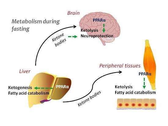 disruptions in homeostasis Human homeostasis 3 calcium calcium regulation in the human body [4] when blood calcium becomes too low, calcium-sensing receptors in.