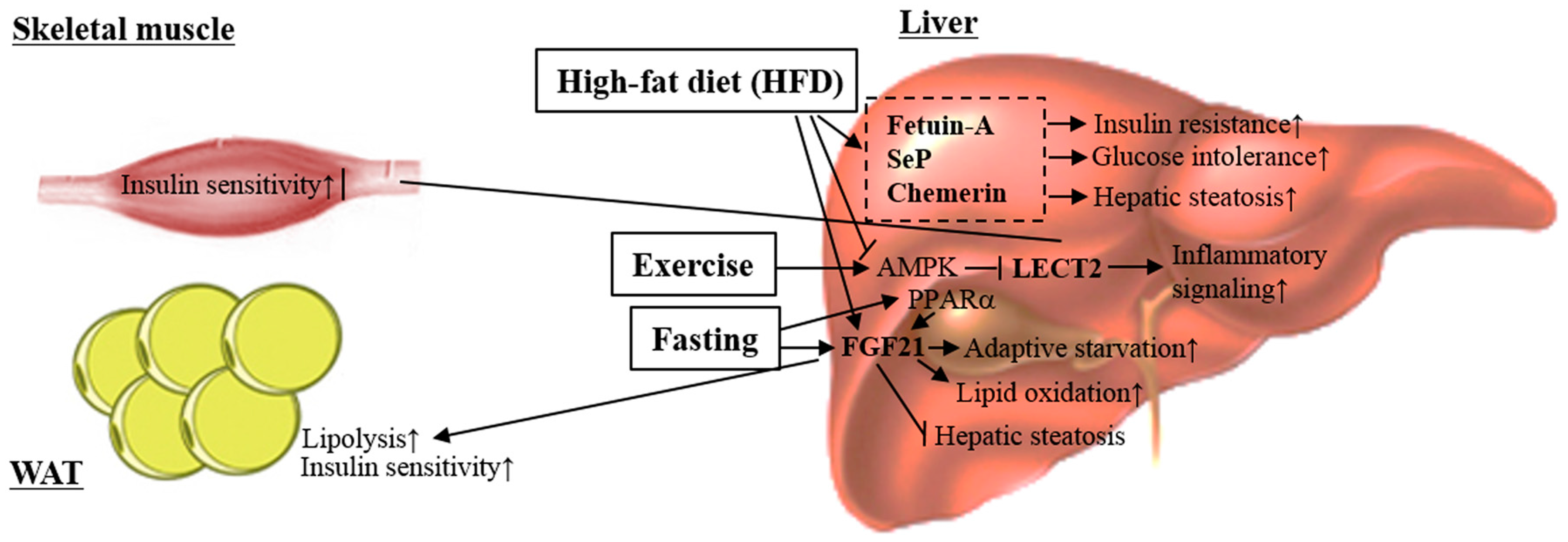 metabolic balance basel