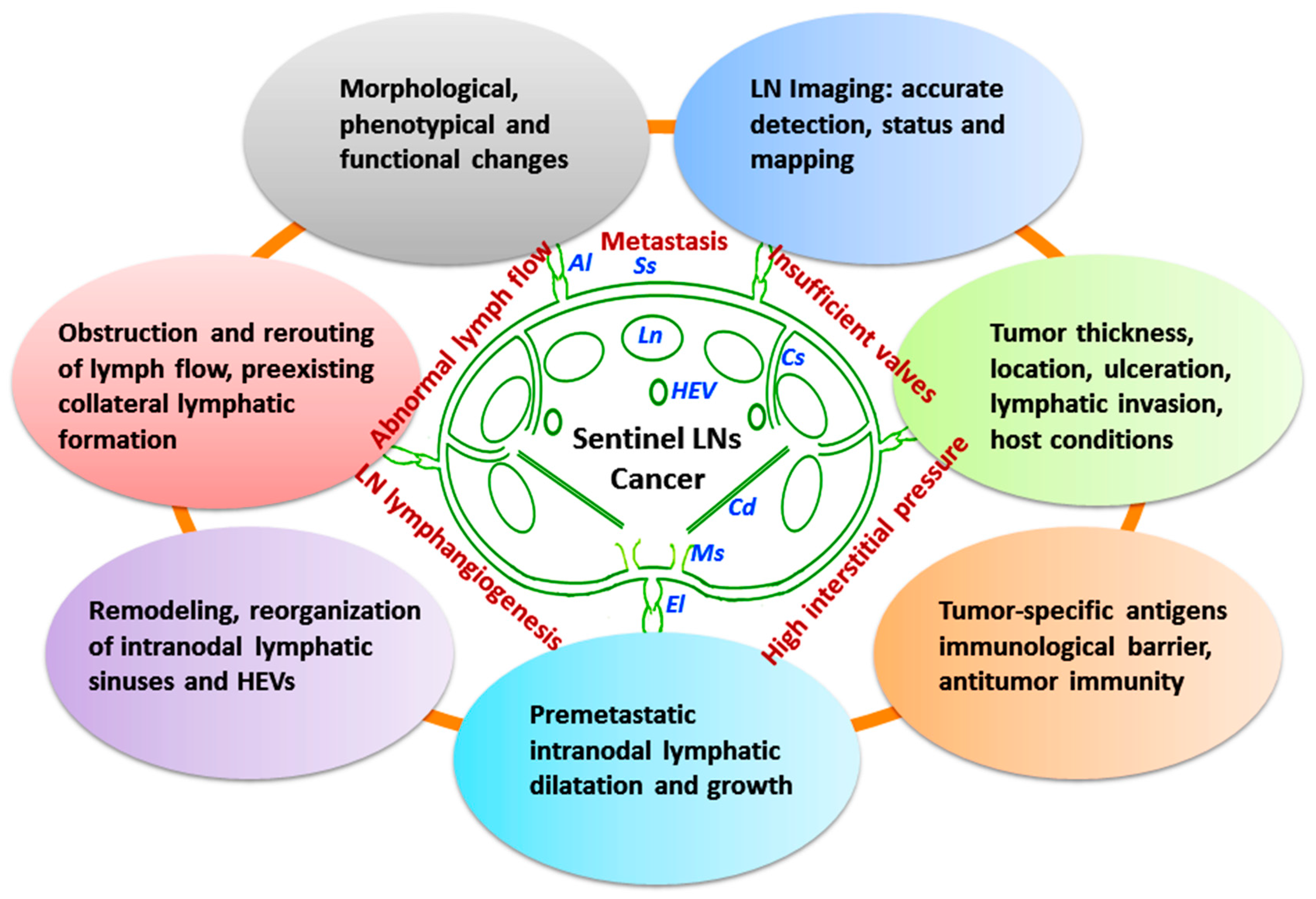 Ijms Free Full Text Lymph Nodes And Cancer Metastasis New