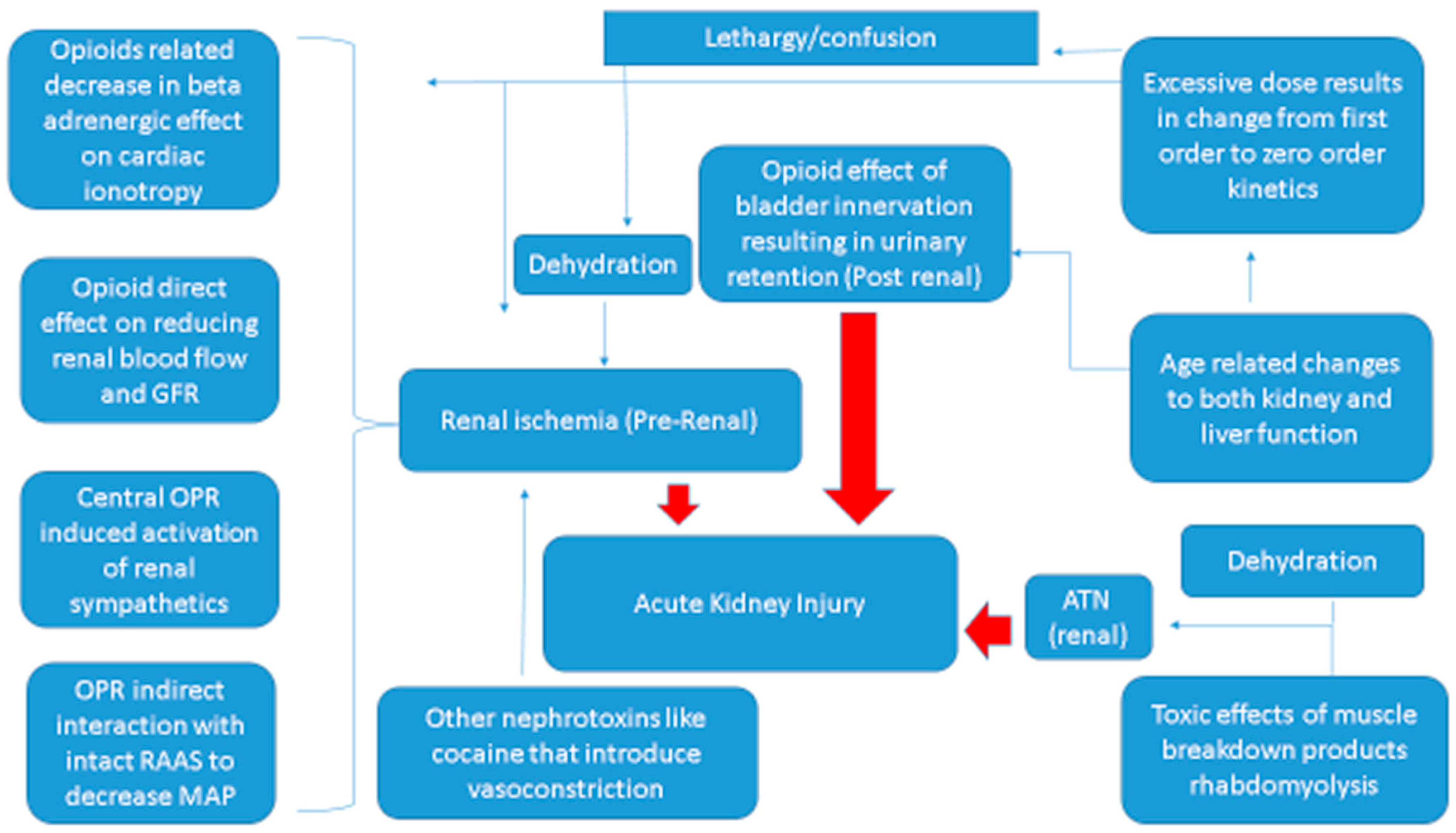 Renal Failure Concept Map.Ijms Free Full Text What Do We Know About Opioids And The Kidney