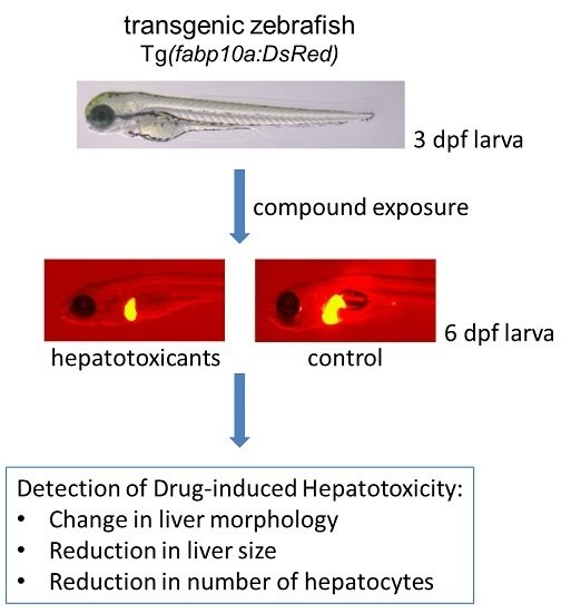 antidepressant-induced hepatotoxicity research paper The fda concept paper antidepressant-induced hepatotoxicity the studies on which this article are based have been funded by research grants from the.