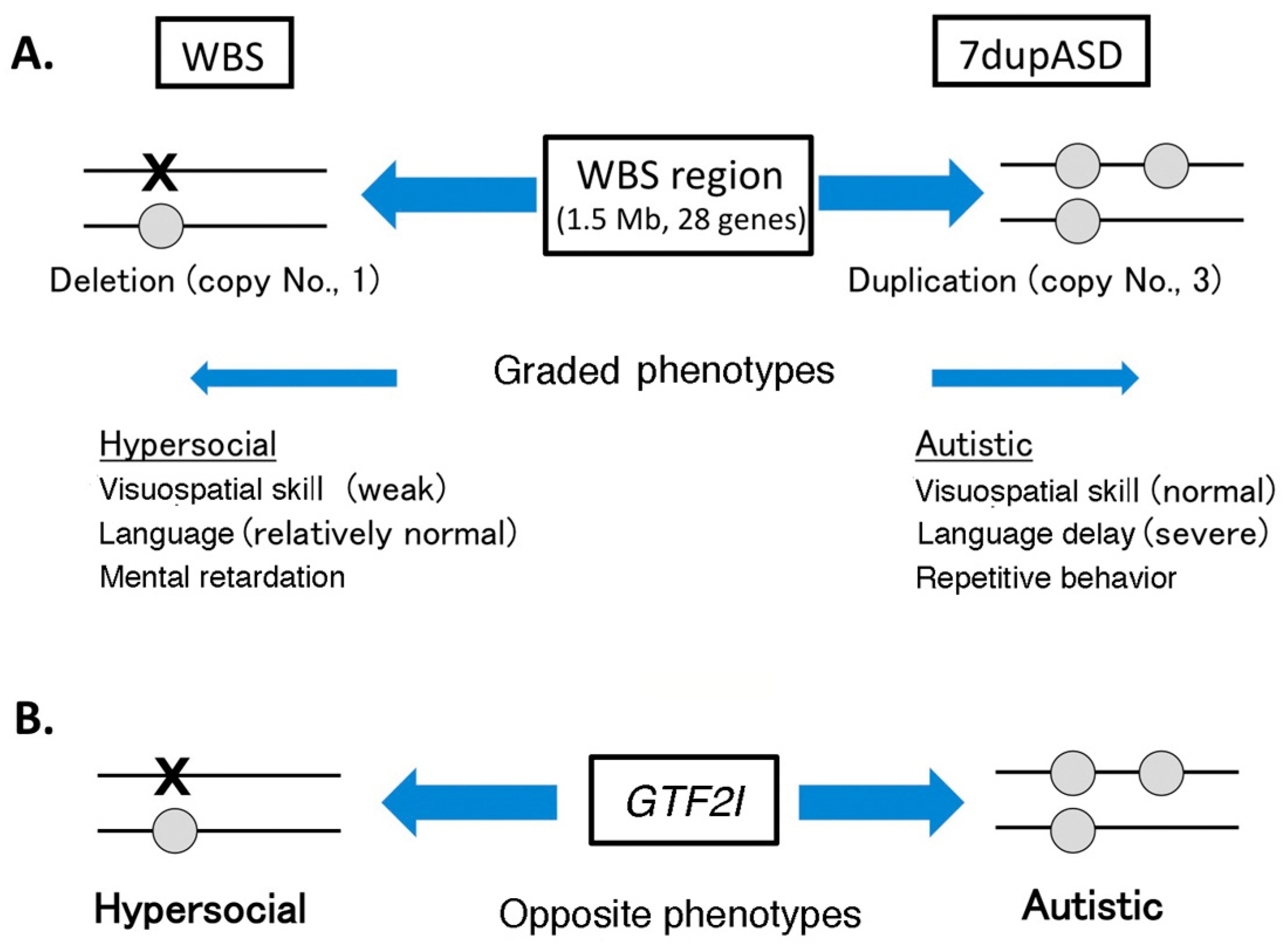 IJMS | Free Full-Text | Role of Splice Variants of Gtf2i, a