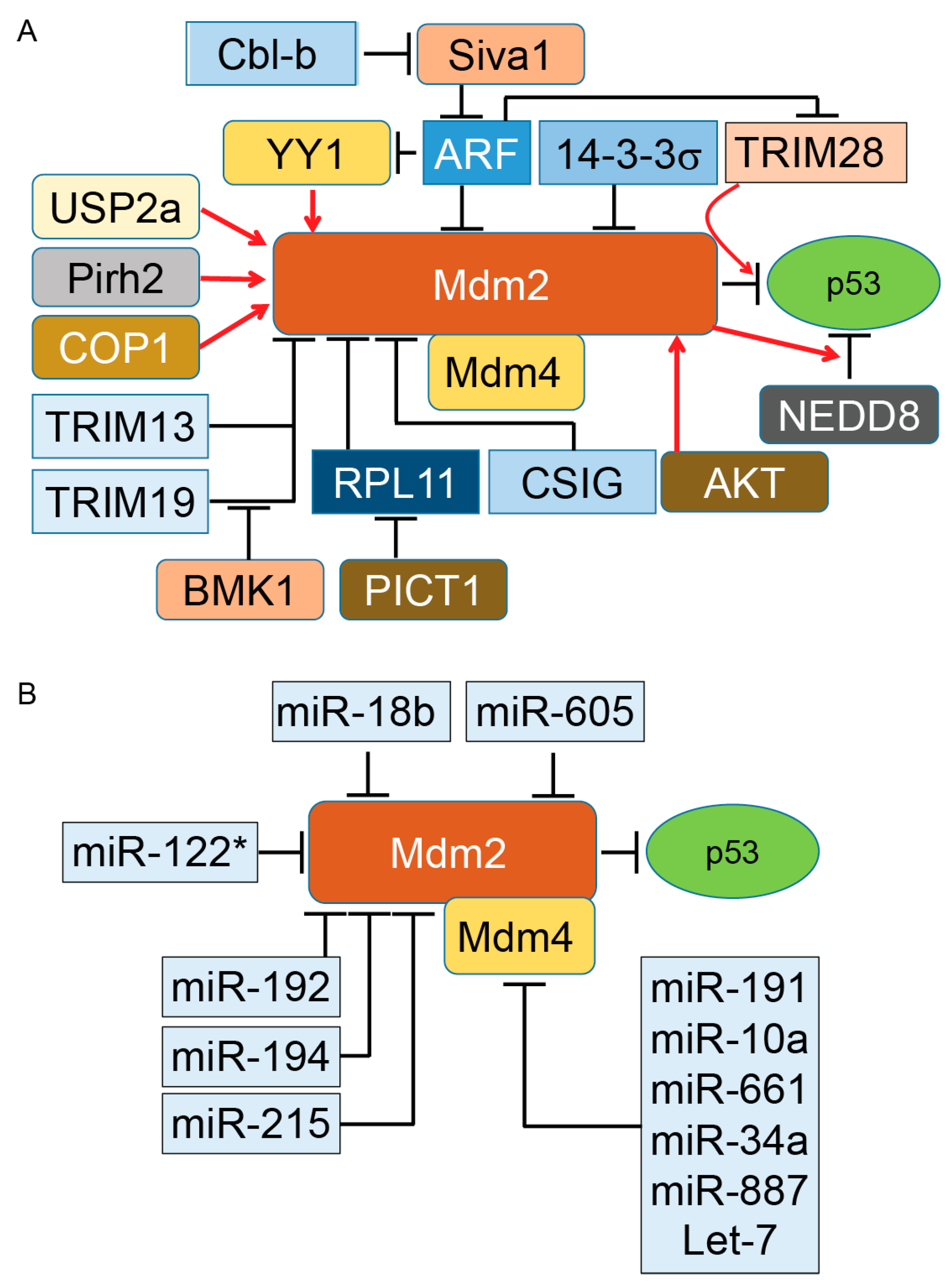 Ijms Free Full Text Essential Roles Of E3 Ubiquitin