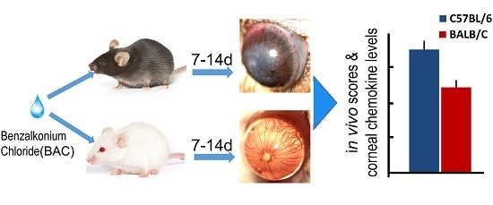 Ijms free full text a comparison of the effects of ijms free full text a comparison of the effects of benzalkonium chloride on ocular surfaces between c57bl6 and balbc mice html fandeluxe Image collections