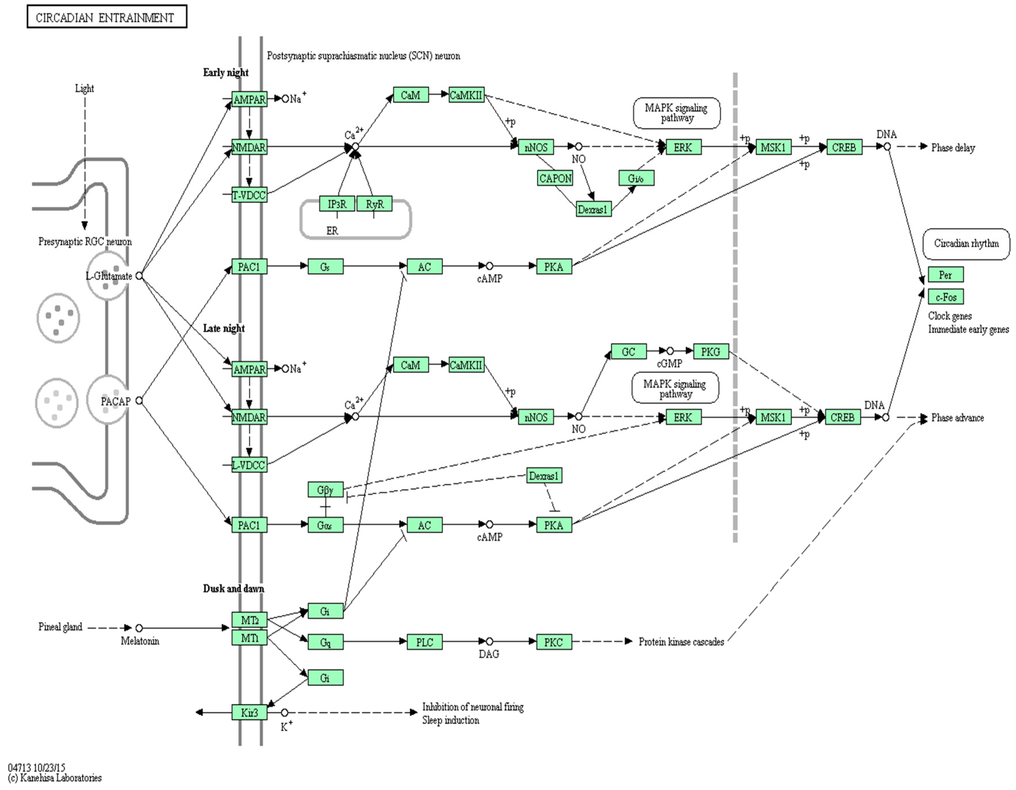 ijms full text geneanalytics pathway analysis and genetic no