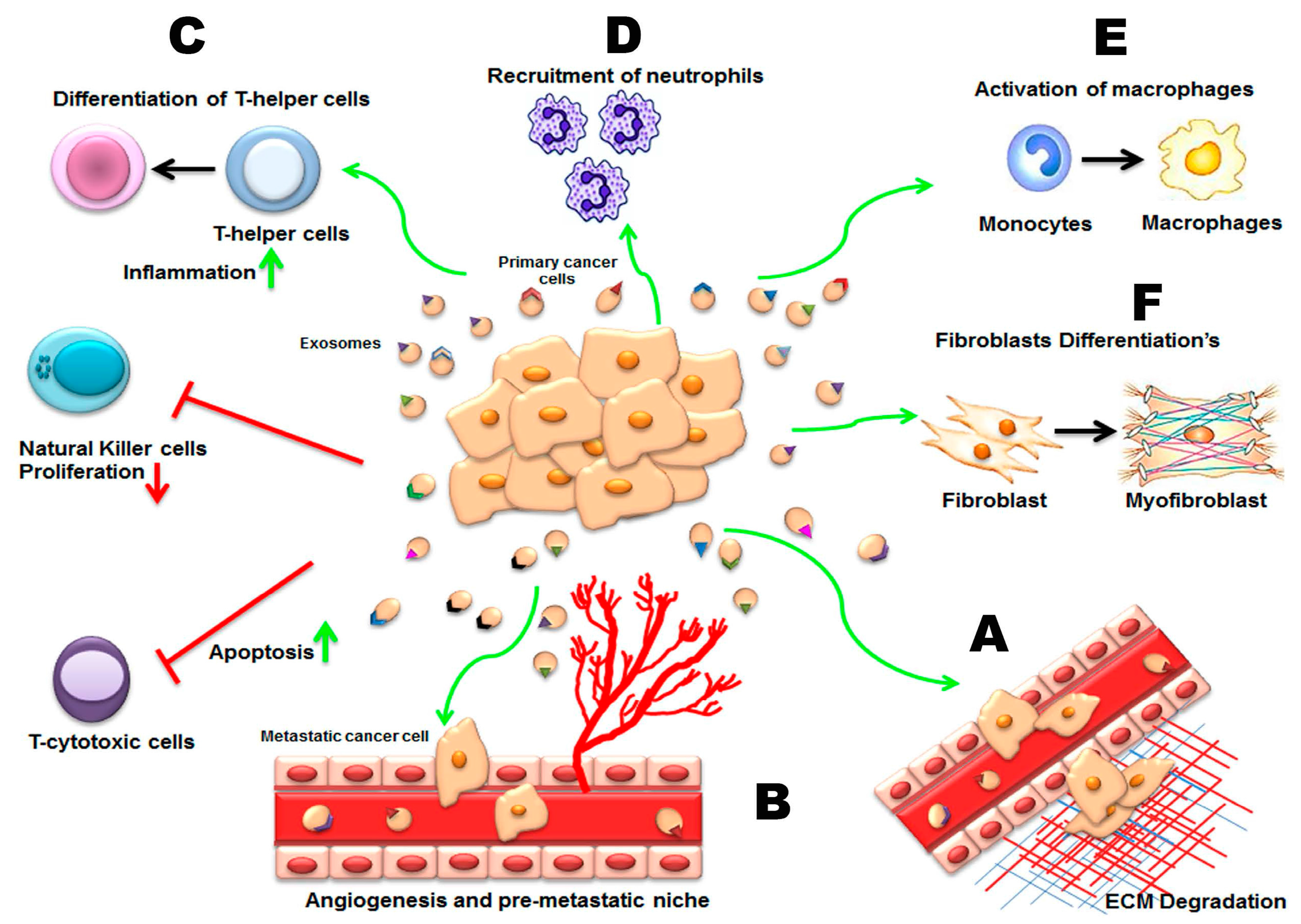 Ijms Free Full Text Exosomes From Garbage Bins To