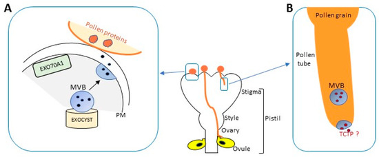 unconventional protein secretion review