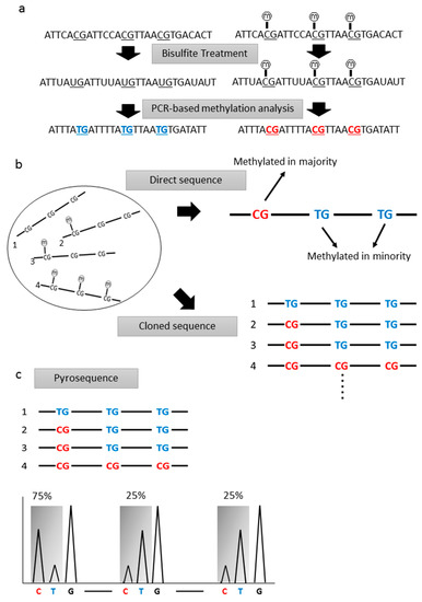 Analysis of DNA Methylation Status in Bodily Fluids for Early Detection of Cancer