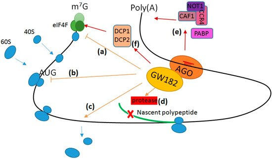 The Role of MicroRNAs in Myocardial Infarction: From Molecular Mechanism to Clinical Application