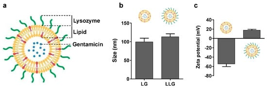 Lysozyme Associated Liposomal Gentamicin Inhibits Bacterial Biofilm