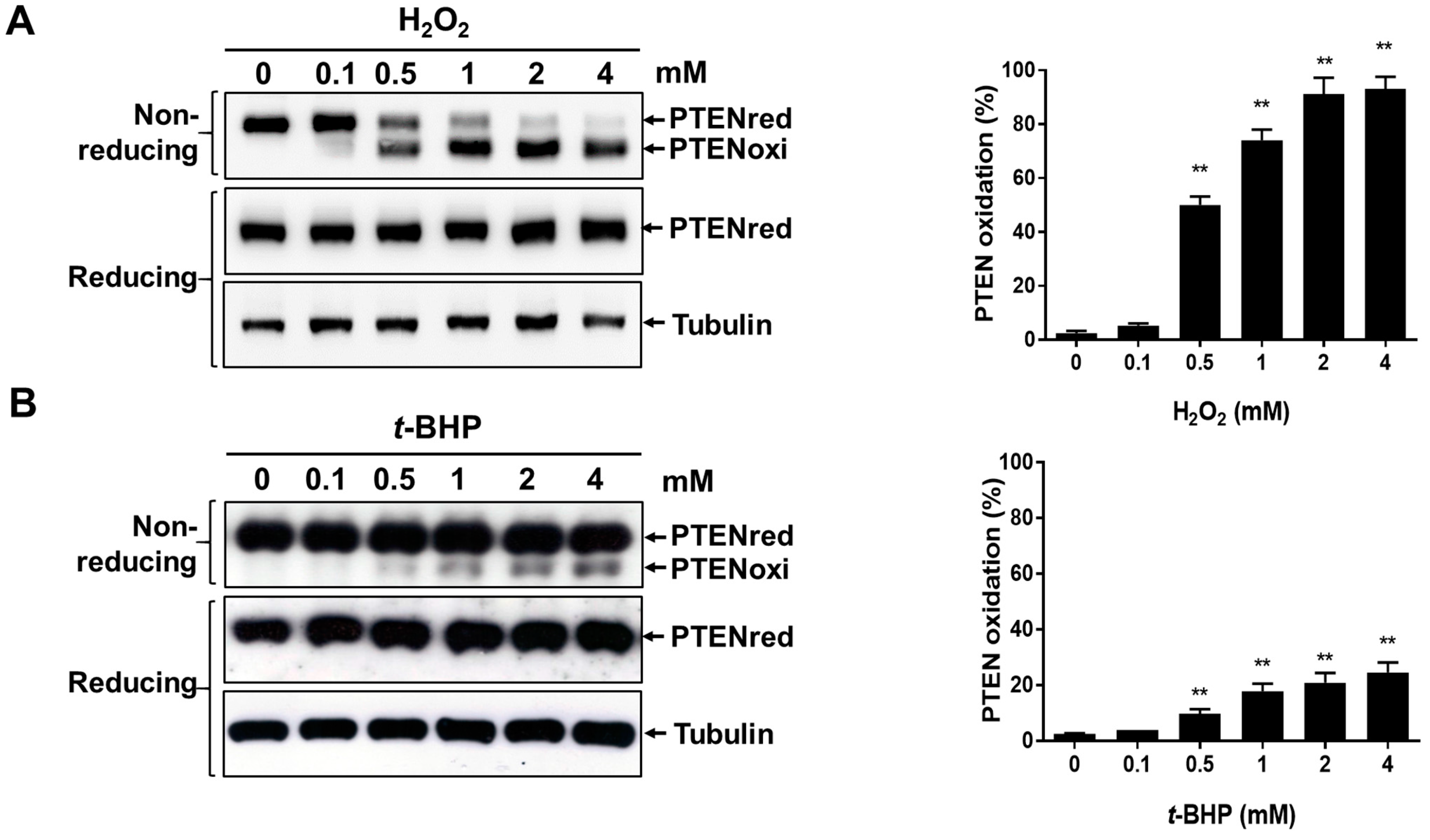 Ijms free full text redox regulation of the tumor suppressor pten by hydrogen peroxide and - Unknown uses hydrogen peroxide ...
