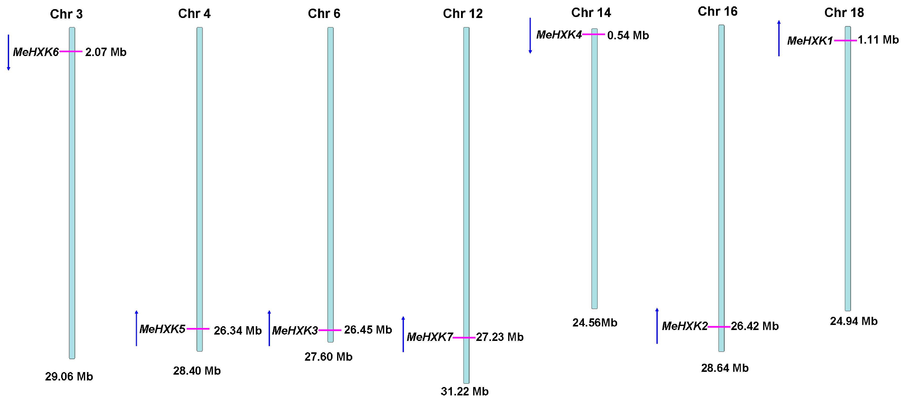 analysis of the dbr 1 gene Gene expression data analysis (i) statistical analysis bmif 310, fall 2010 sample_1 sample_2 sample_3 sample_4 sample_5 gene set enrichment analysis.