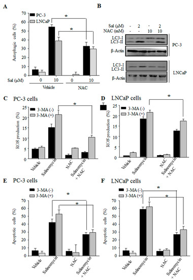 Autophagy Inhibition Promotes Bevacizumab-induced