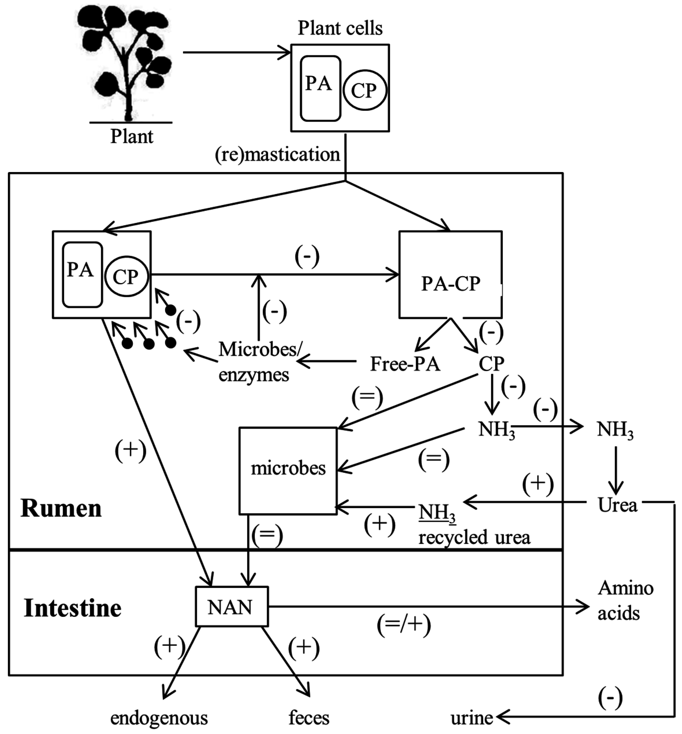 Ijms free full text the occurrence biosynthesis and no pooptronica