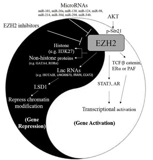 ilias kit organische chemie