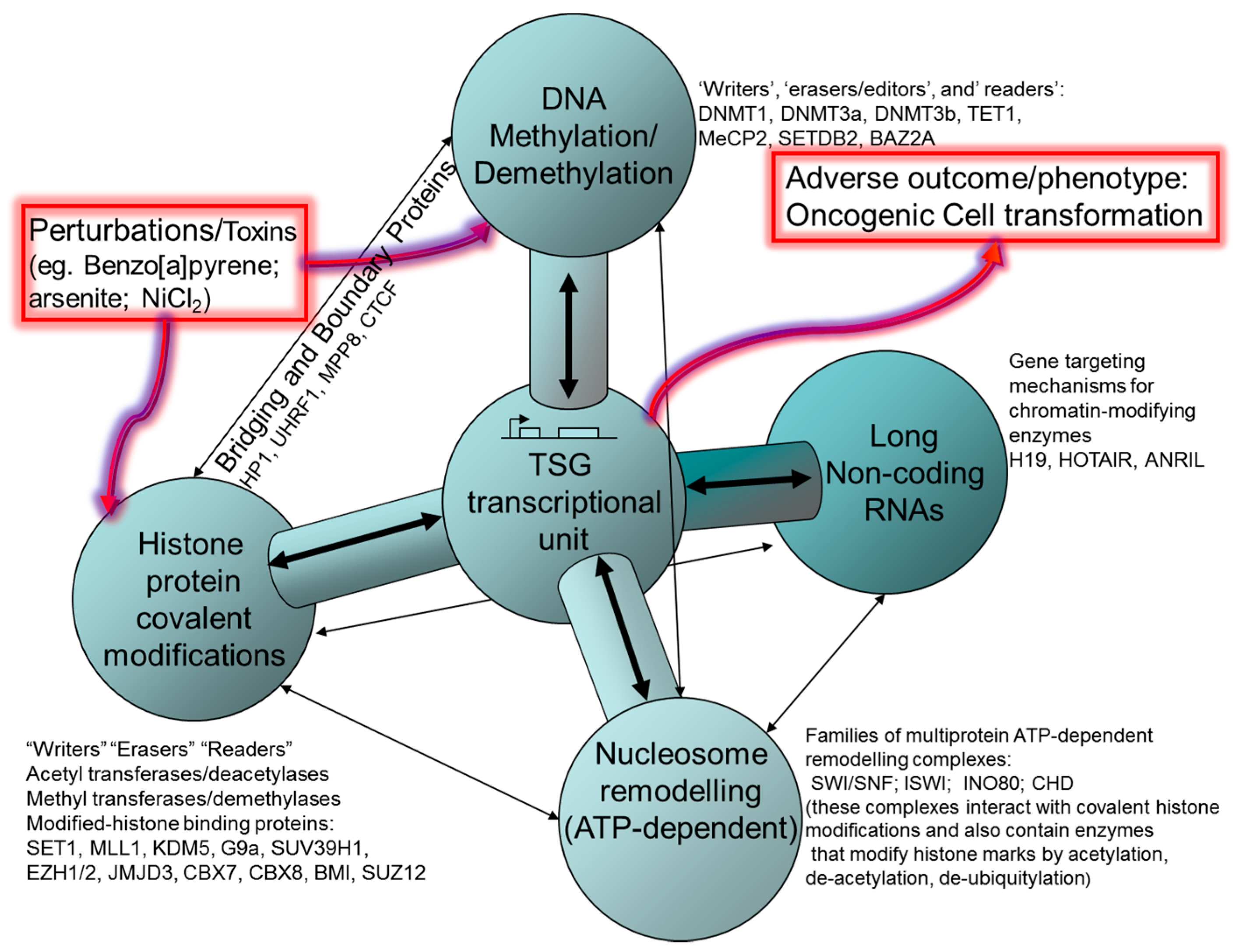 Ijms Free Full Text A Tox21 Approach To Altered Epigenetic Swi Rc Wiring Diagram Kia 18 01179 G004