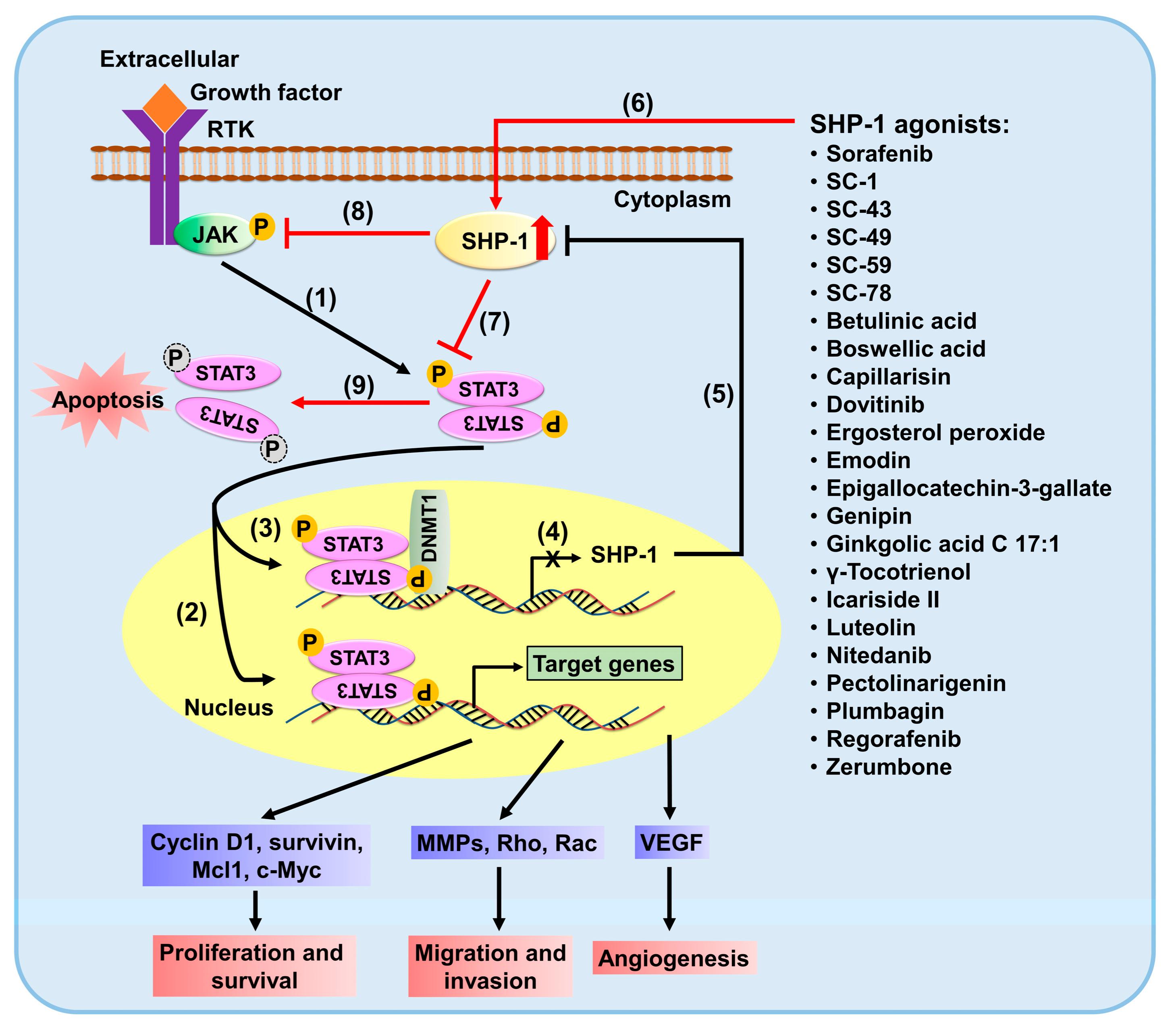 DDZ increased protein tyrosine phosphatases protein