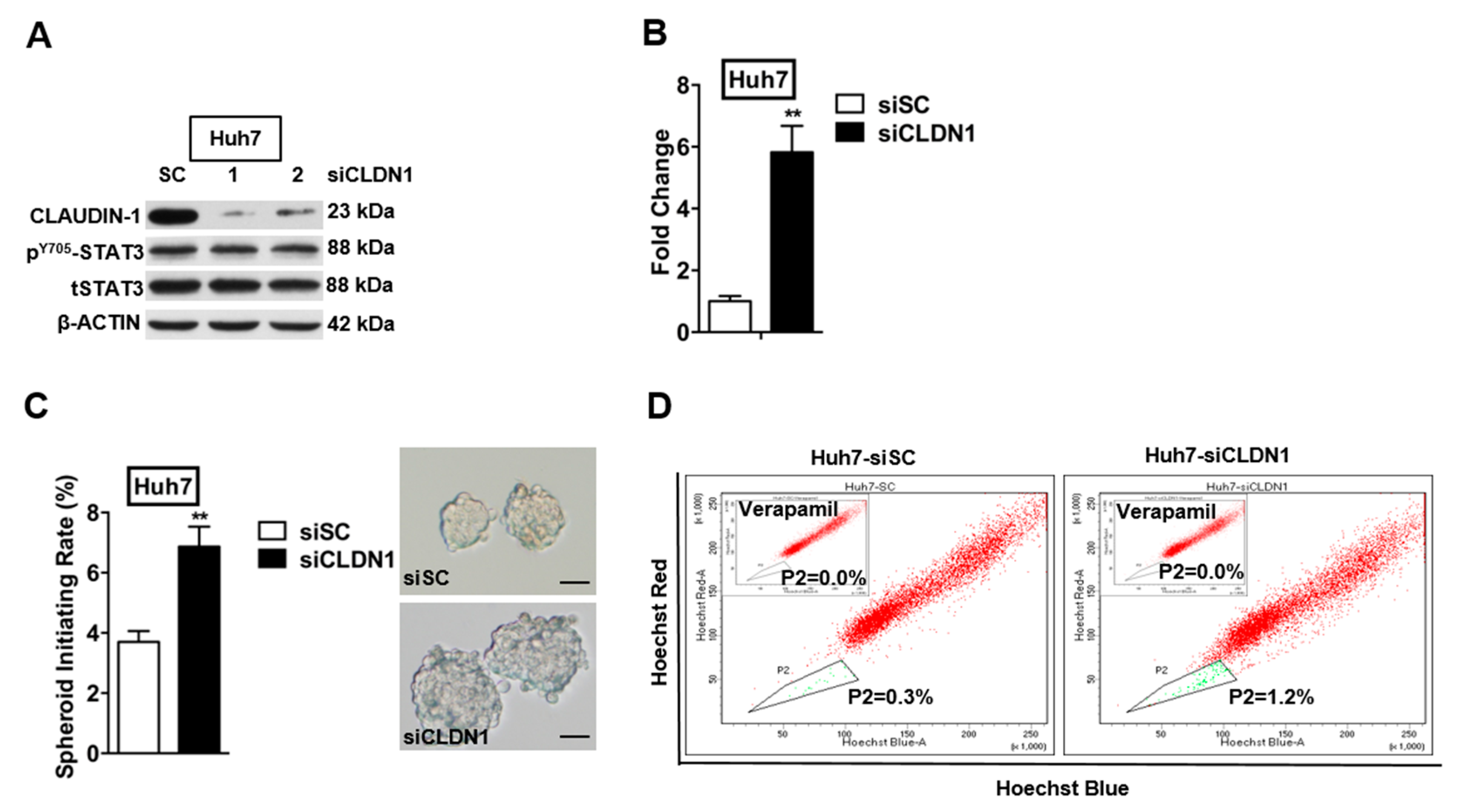 inhibition of dacarbazine on melanoma stem cells Although the genetic pathways involved in such transdifferentiation still remain unknown, the expression of the mesenchymal and neuroectodermal stem-cell markers cd166, cd133, and nestin 3 and of.