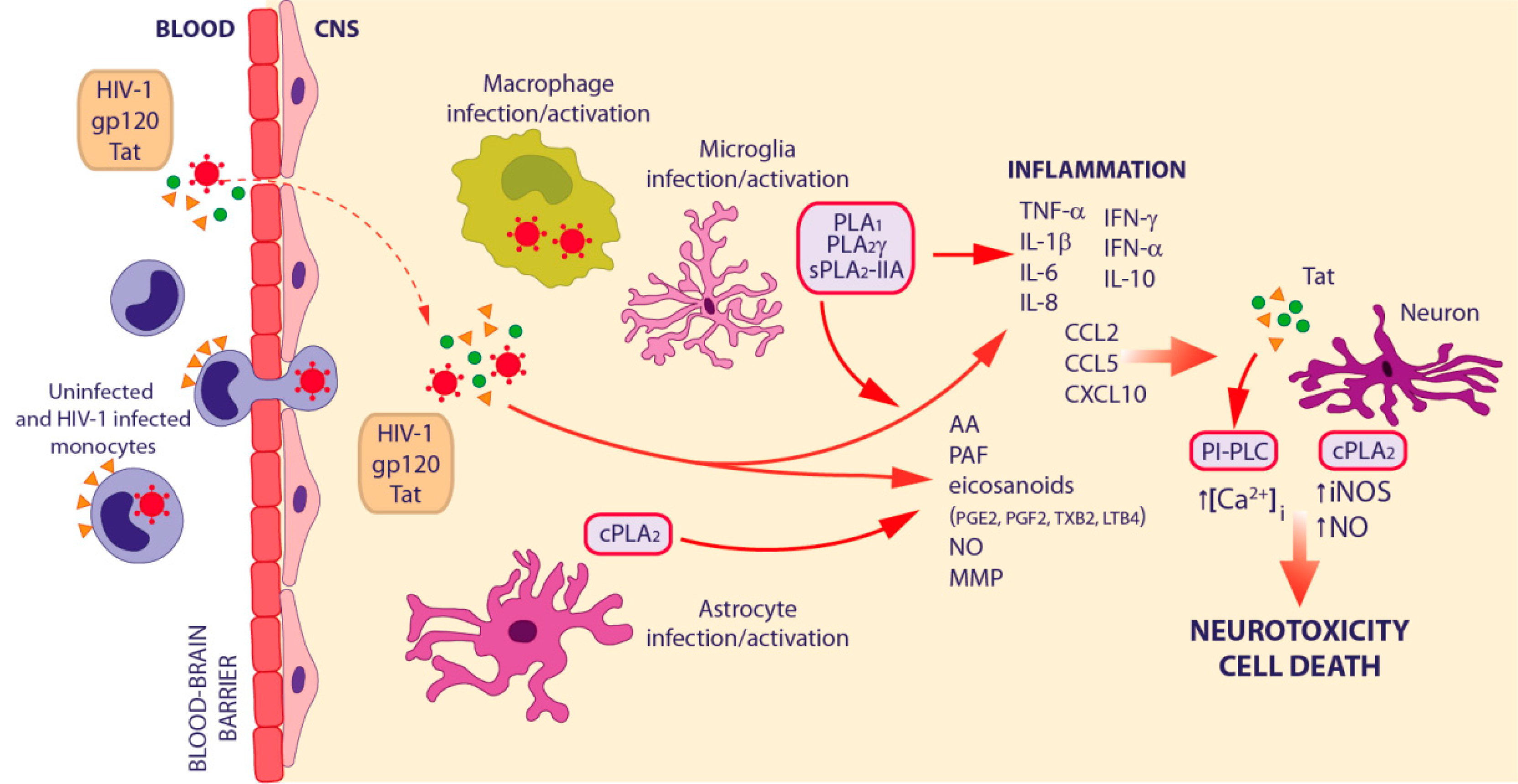 neuroinflammation and obesity thesis pdf