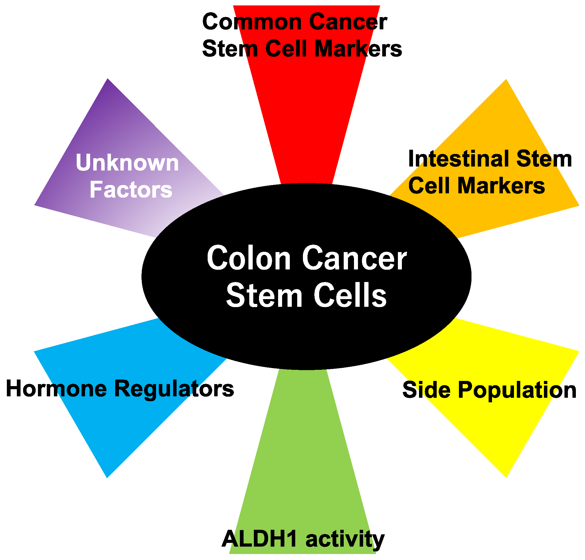 Ijms Free Full Text Multifaceted Interpretation Of Colon Cancer Stem Cells Html