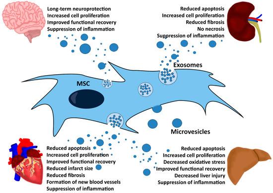 Ijms Free Full Text Mesenchymal Stem Stromal Cell