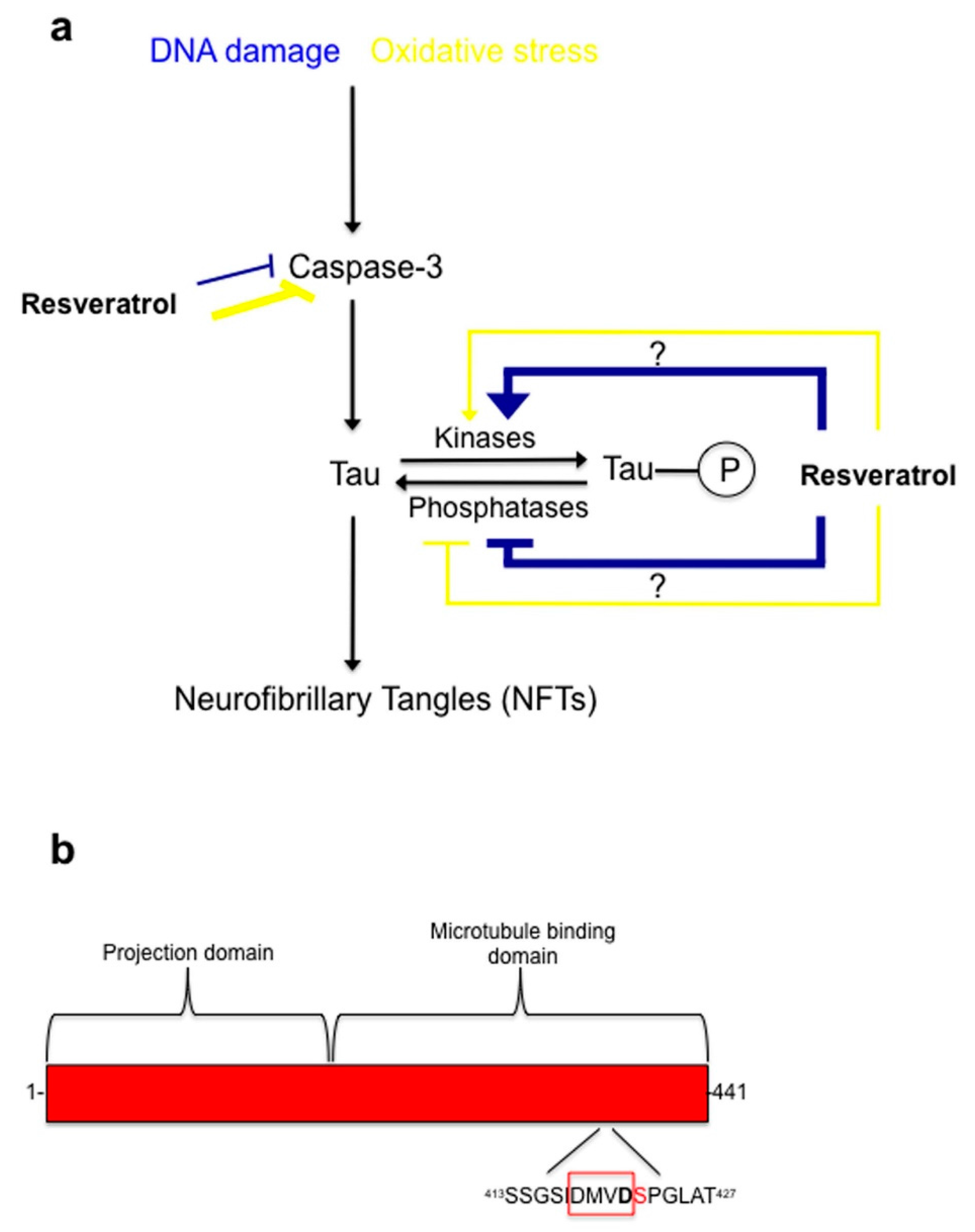 protective effect of resveratrol Pharmacology 200265:170–174 protective effect of resveratrol against  pentylenetetrazole-induced seizures and its modulation by an adenosinergic  system.